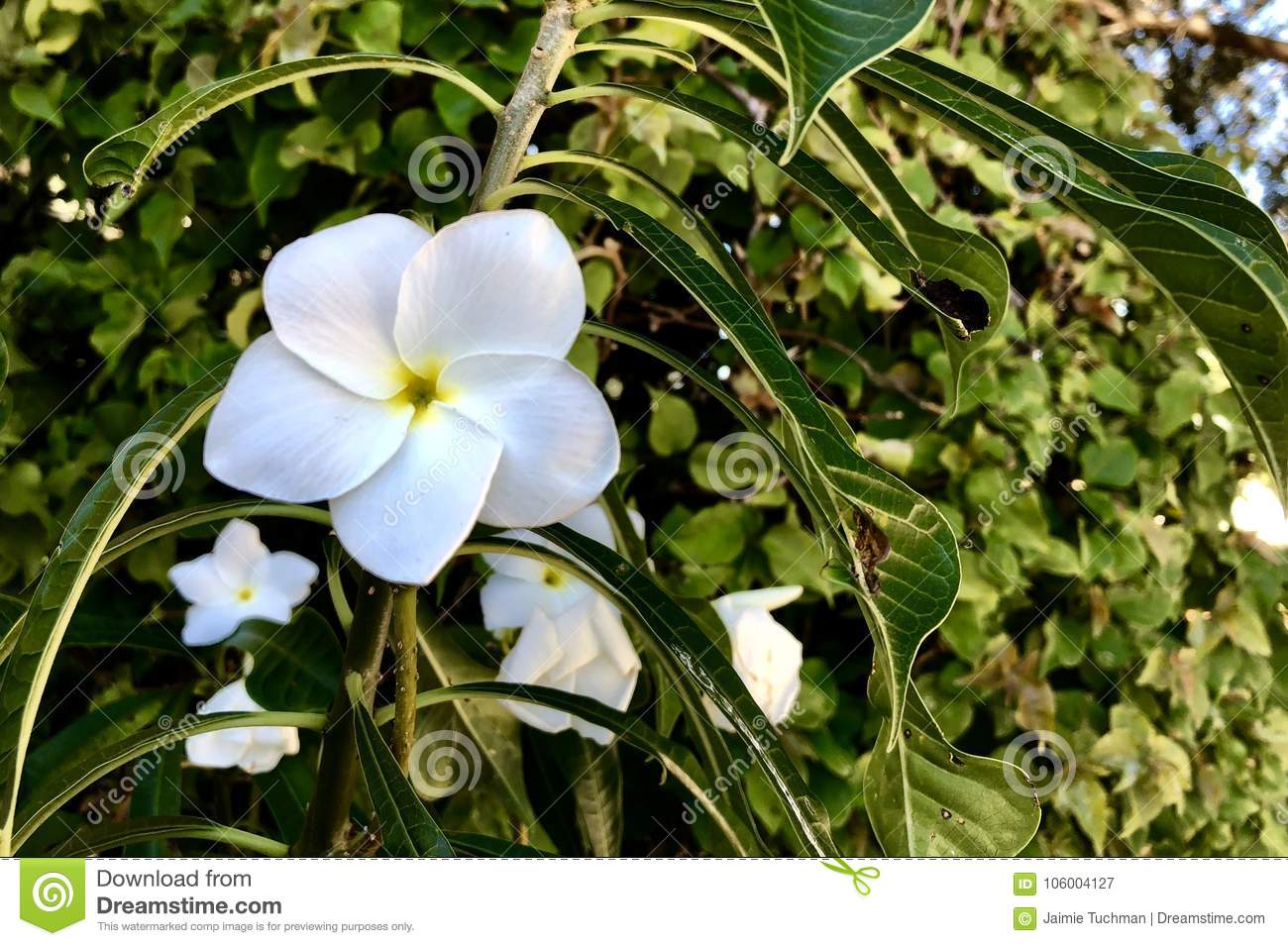 White Flower And Vines Stock Image Image Of Destinations 106004127