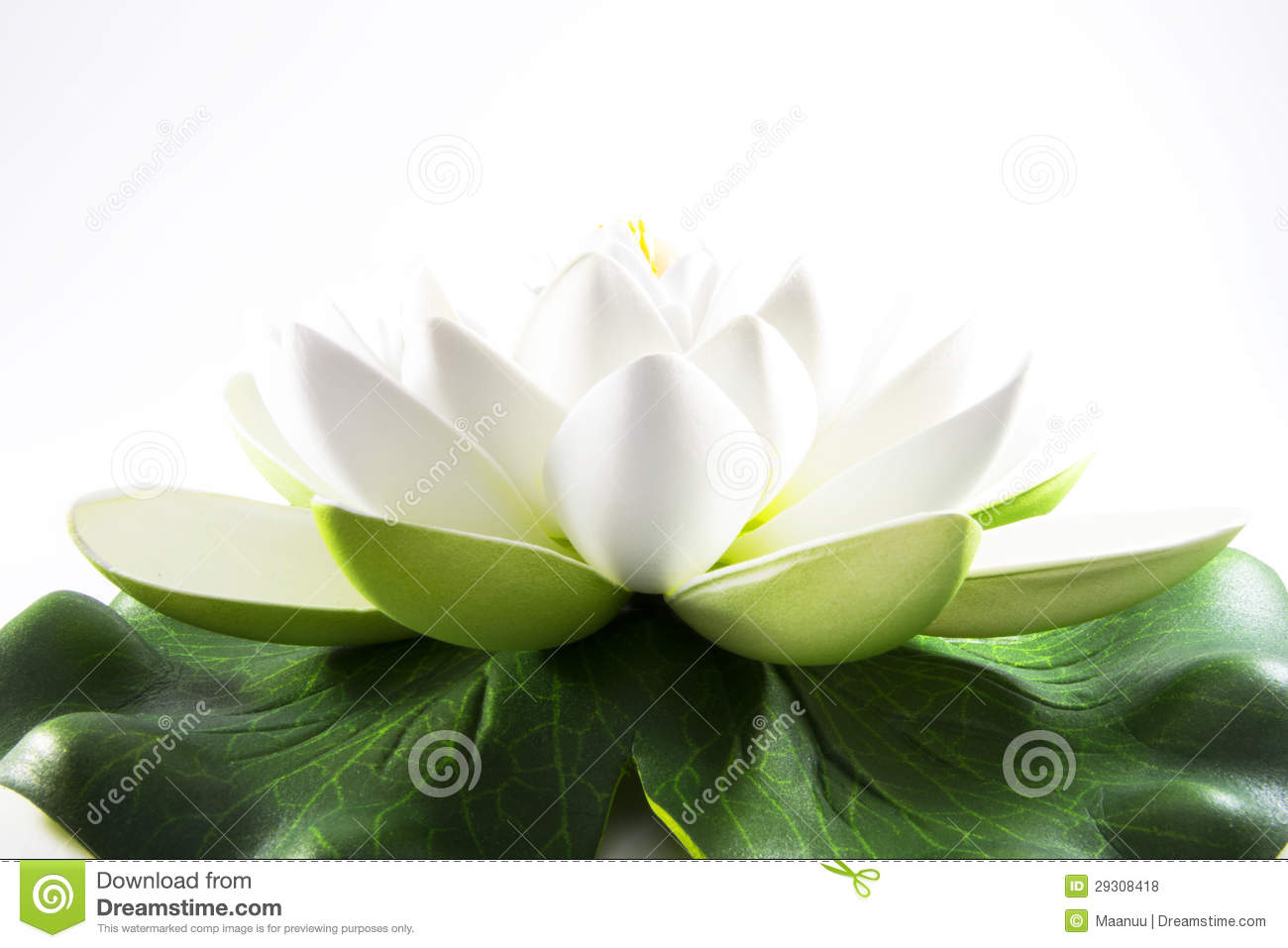 white flower of zen