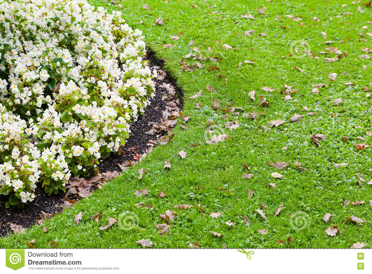 White Flowerbed And Green Grass Stock Image Image Of Foliage