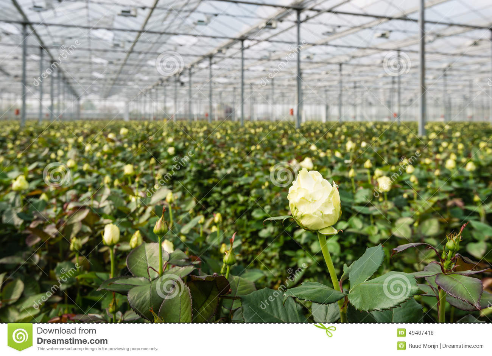 Cut flower farming business plan