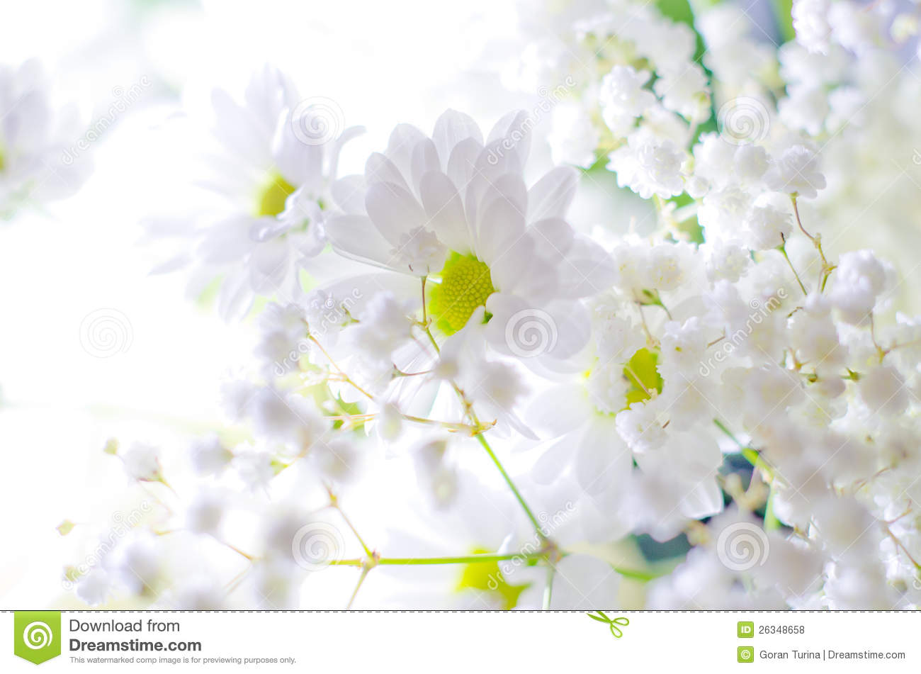 white flowers stock photo  image, Natural flower