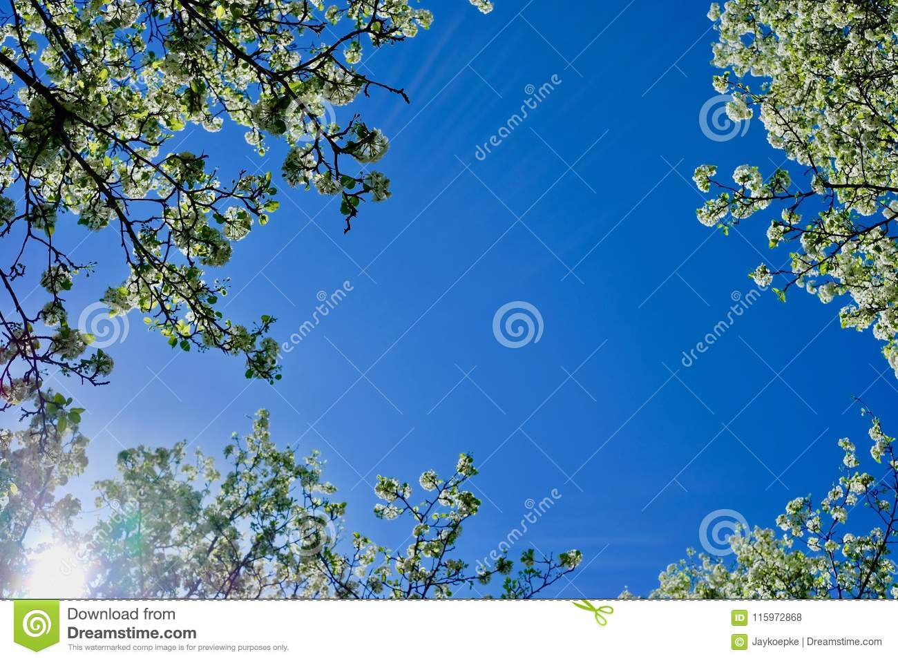 Flowering trees from below with blue sky behind stock photo image download comp izmirmasajfo