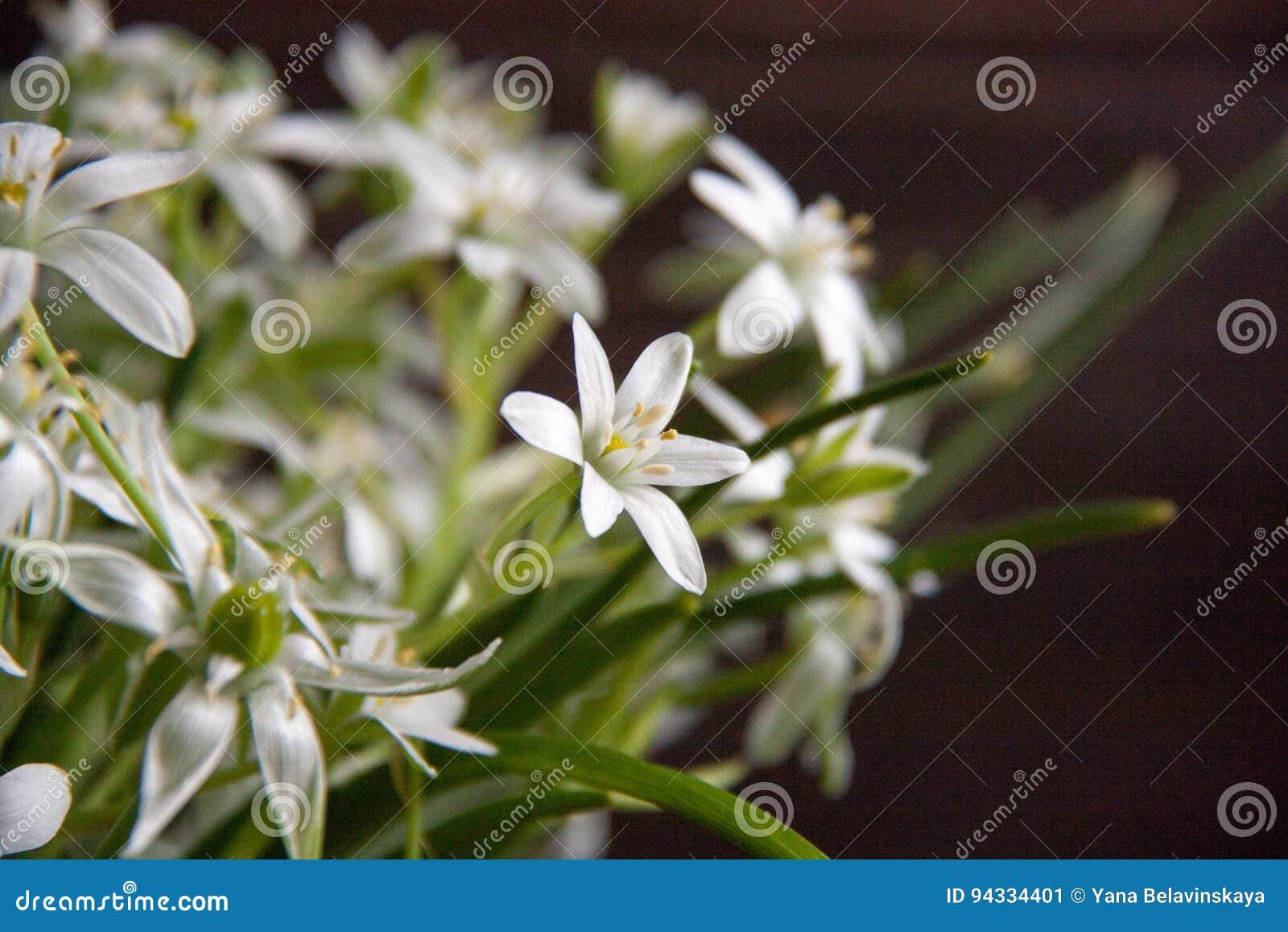 White Flowers Stock Image Image Of Good Fragrance Birdworm 94334401