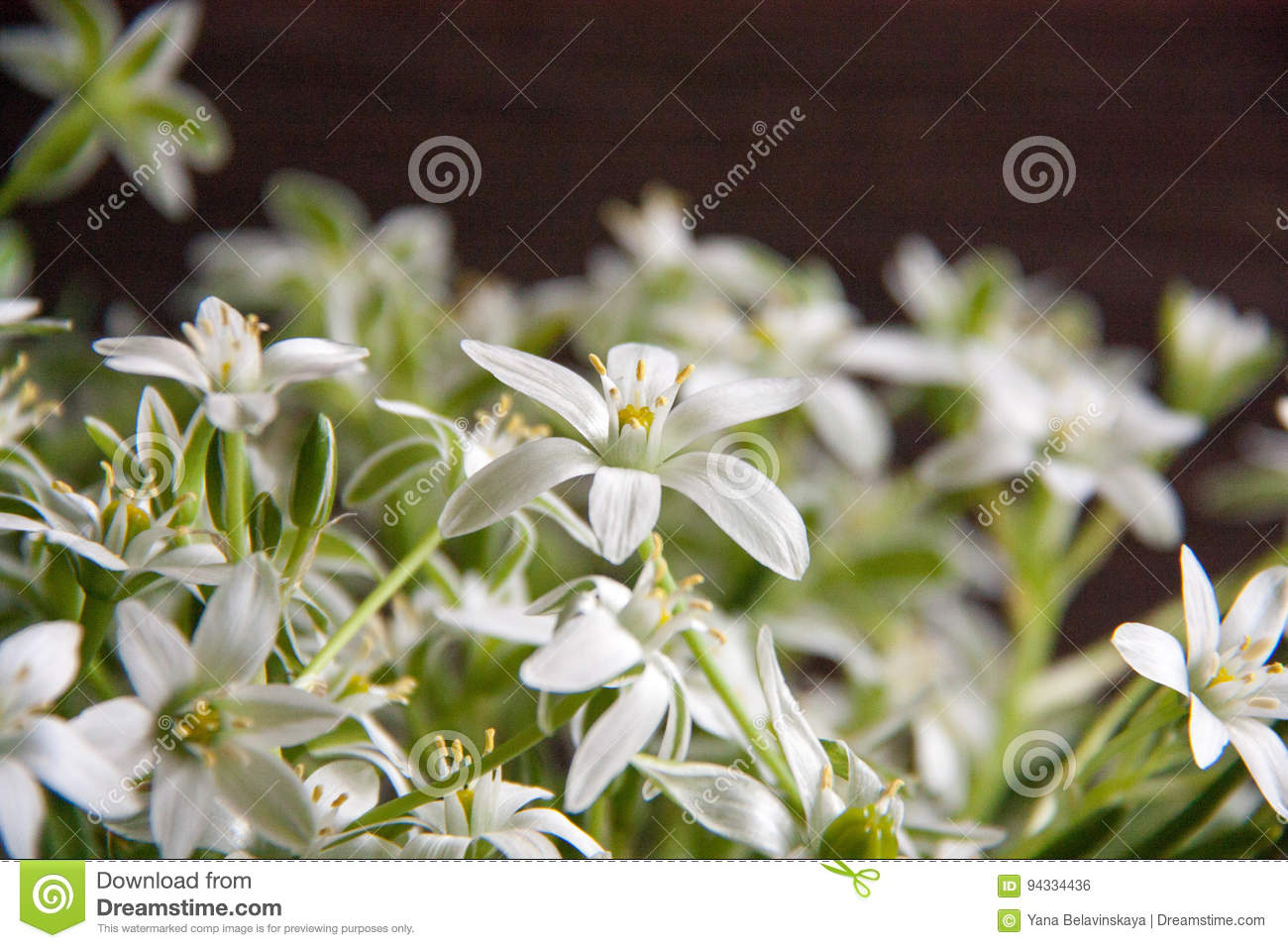 White Flowers Stock Photo Image Of Herbs Blackwood 94334436