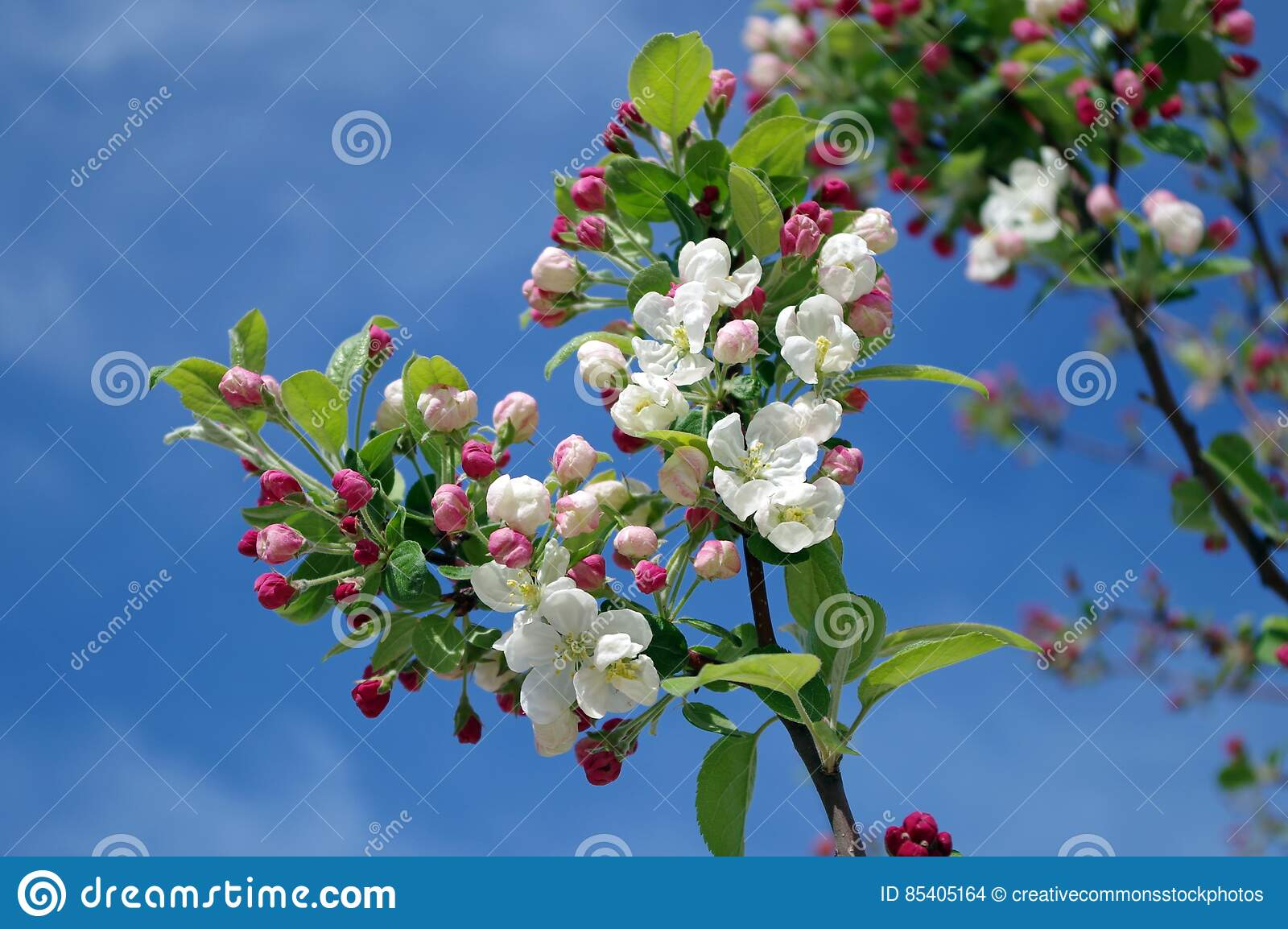 bb9fe7f12ac White Flowers On Black Tree Branch Under Sky During Daytime Picture ...