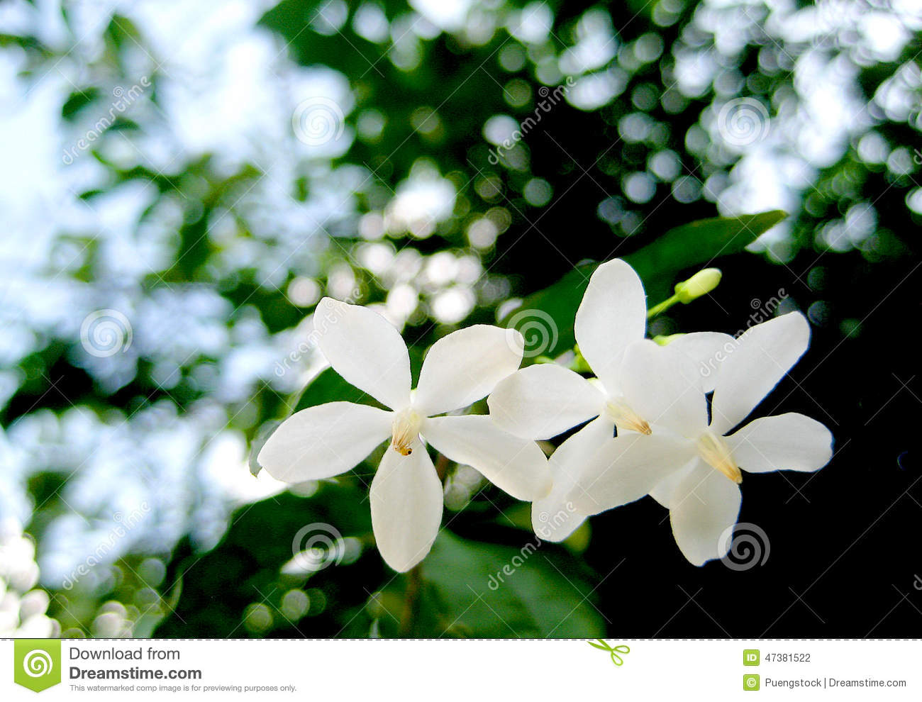 White Flowers With Bokeh Background Stock Photo Image Of Easy