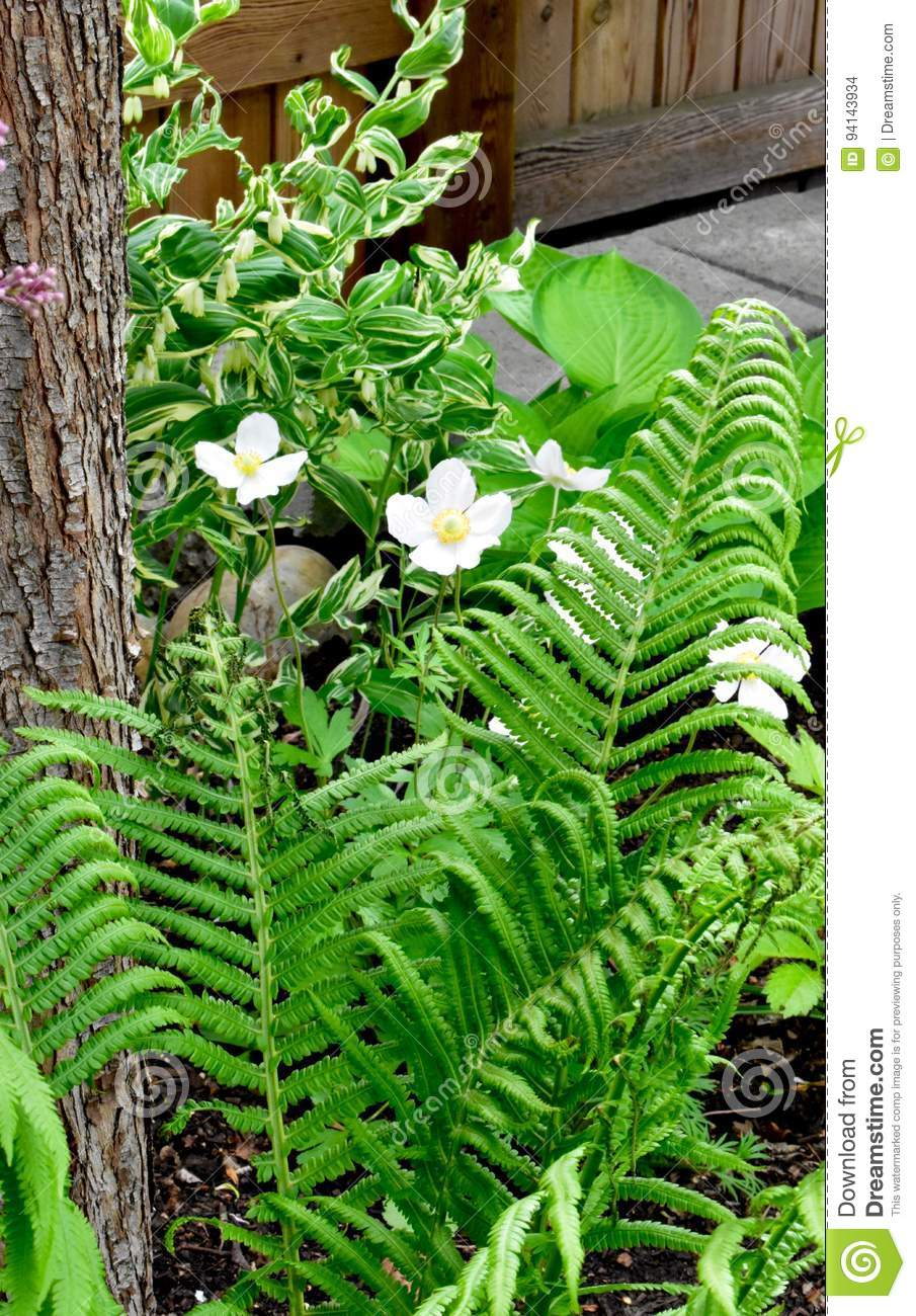 White Flowers And Fern Fronds Stock Photo Image Of Variegated