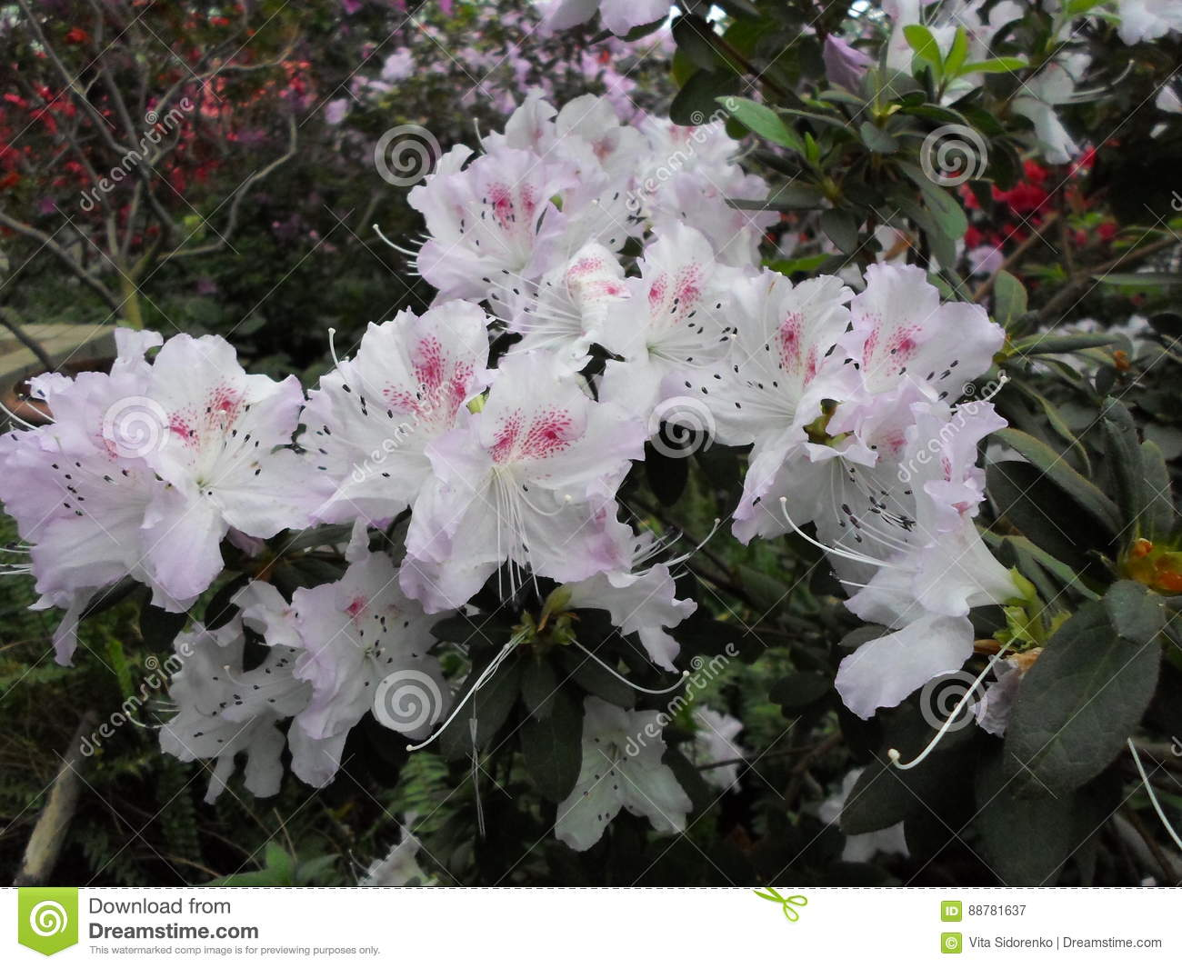 White flowers flowers blooming tree in the spring white flowers download white flowers flowers blooming tree in the spring white flowers azaleas mightylinksfo