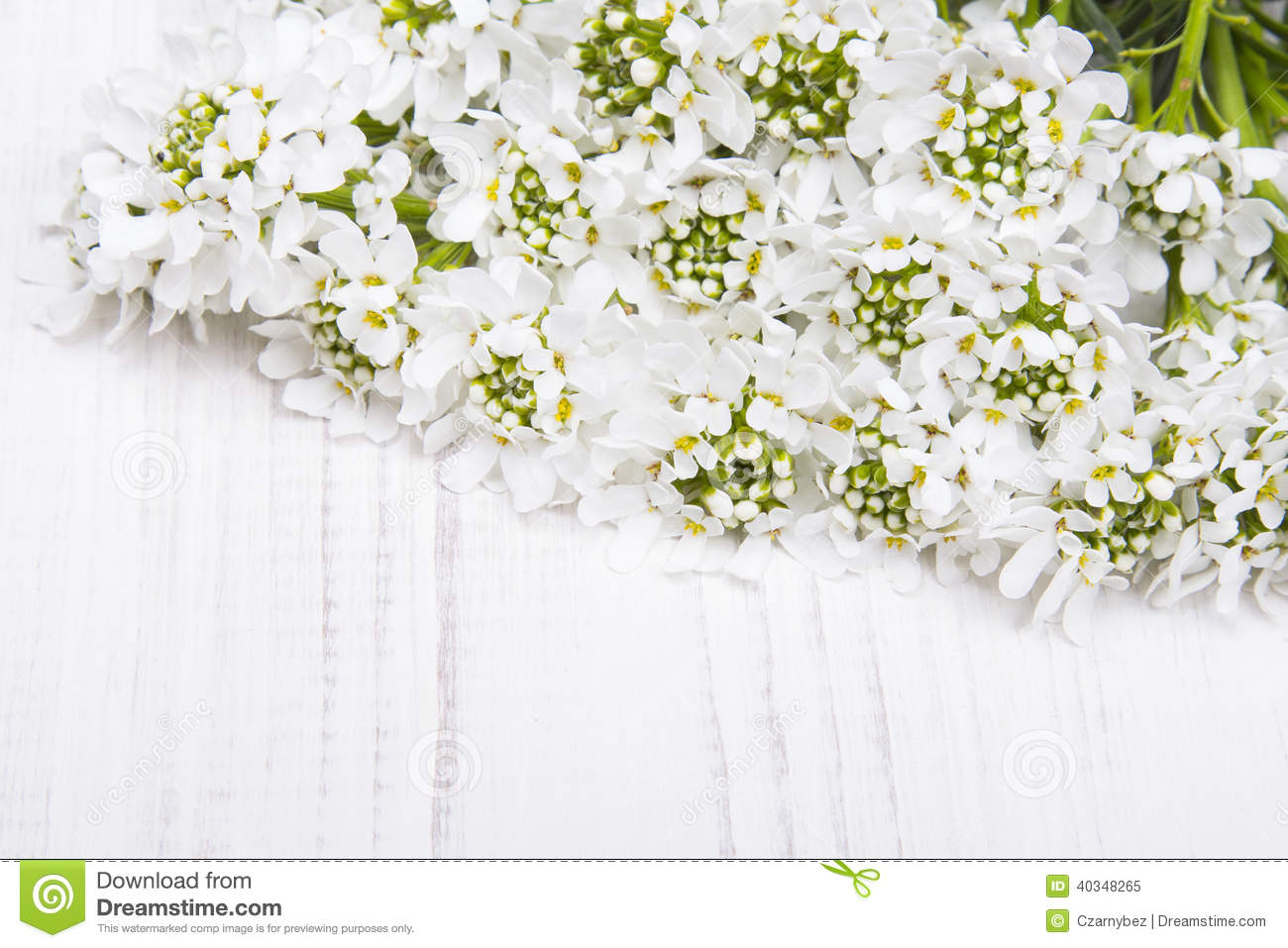 White Flowers Frame Stock Image Image Of Floral Frame 40348265