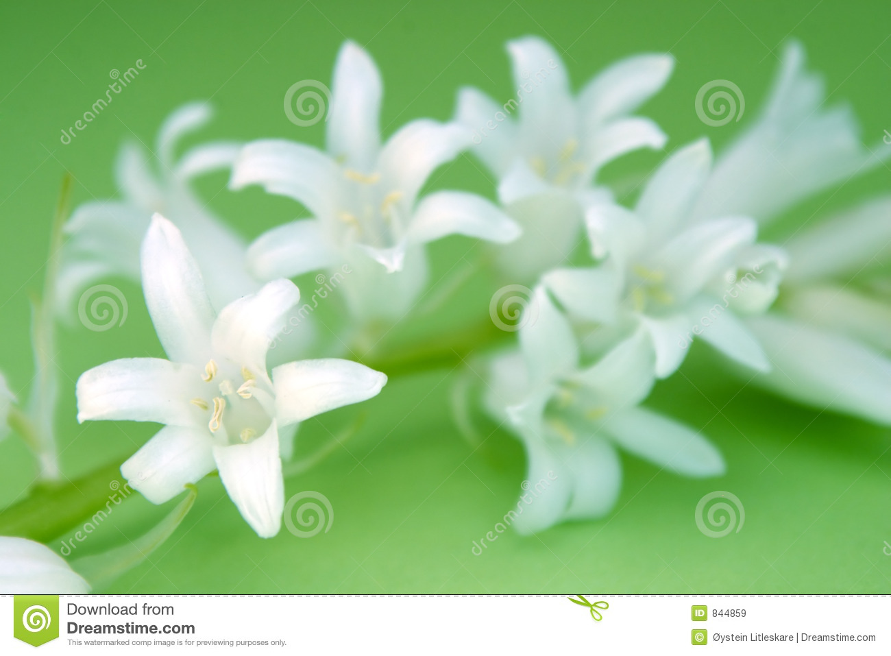 White Flowers On Green Backround Stock Image Image Of Pretty