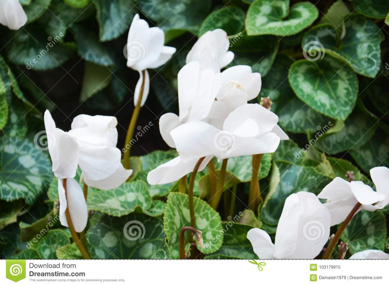 White flowers and green leaves flowers close up stock image image white flowers and green leaves flowers close up mightylinksfo