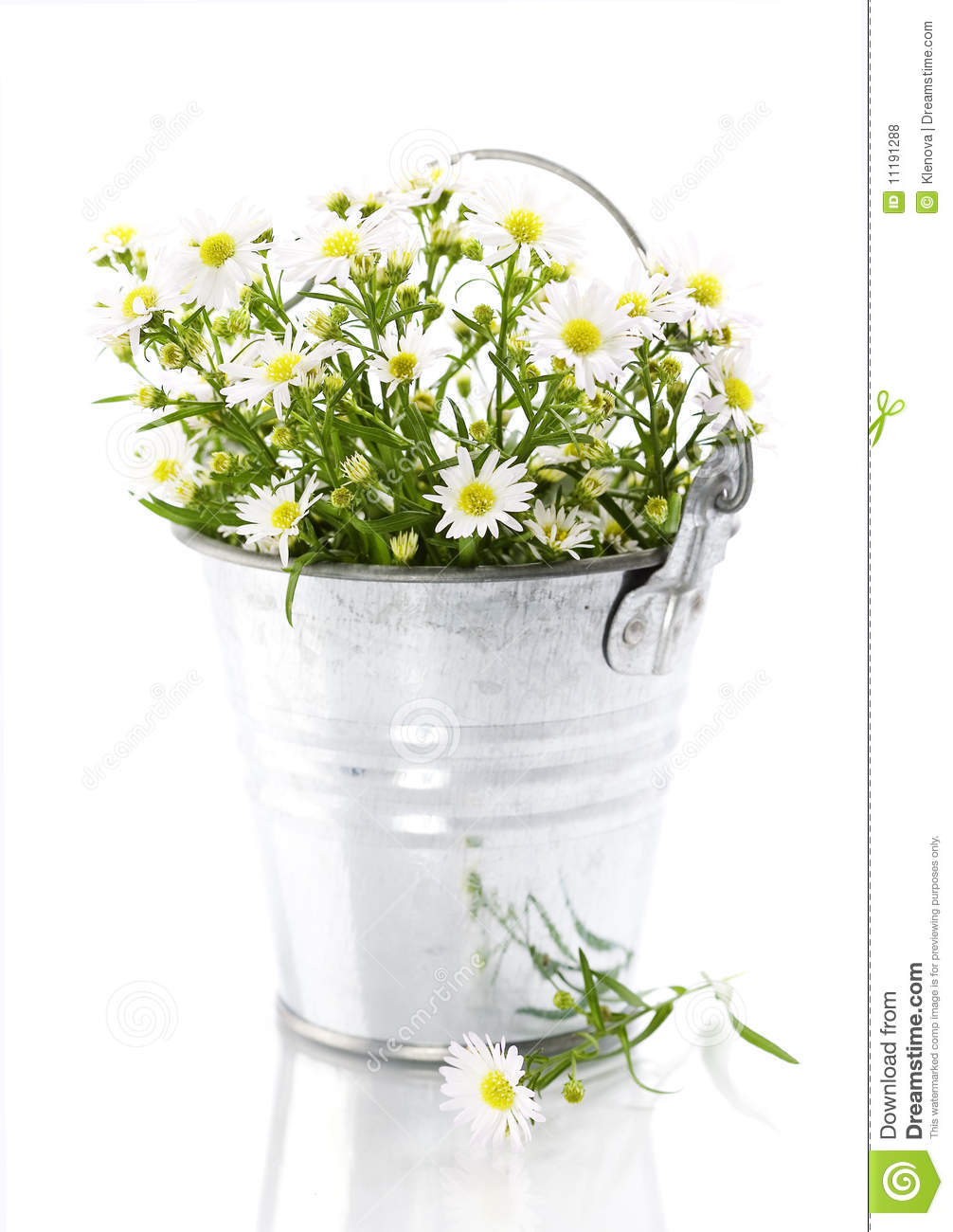 white flowers in a pot stock photo. image of bloom, bucket - 11191288