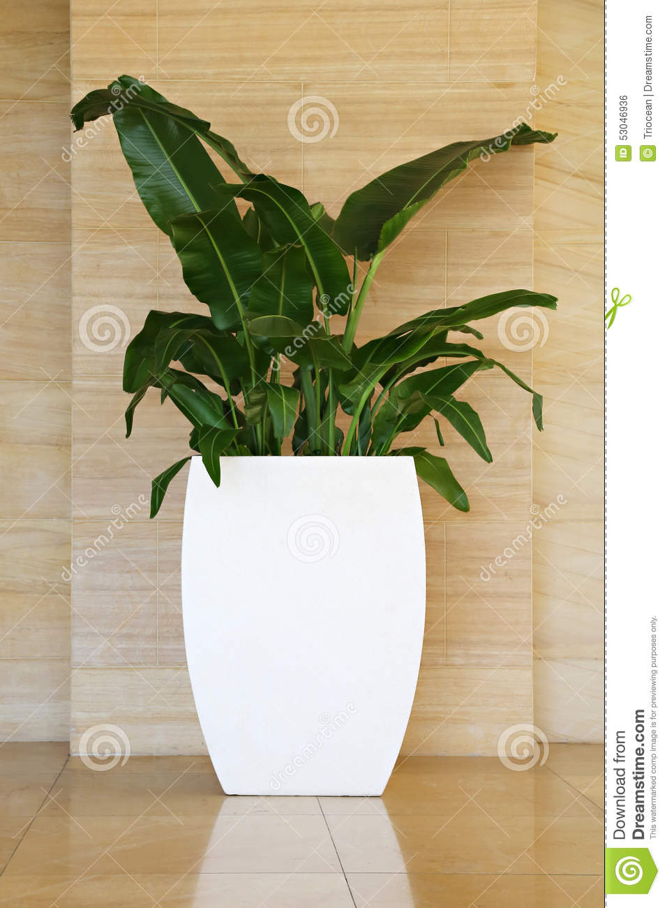 White Flowers In A Pot Stock Photo Image Of Office White 53046936