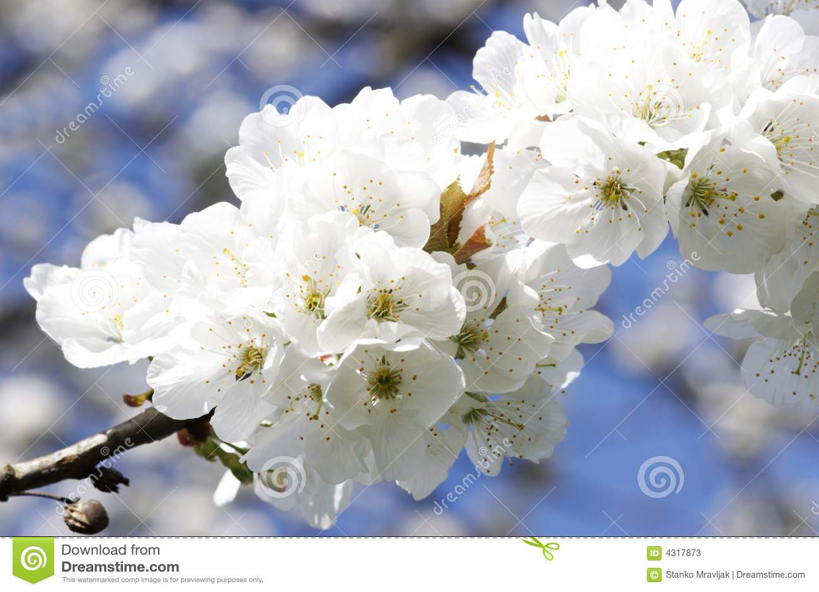 White flowers tree stock image image of white bloom 4317873 white flowers tree mightylinksfo