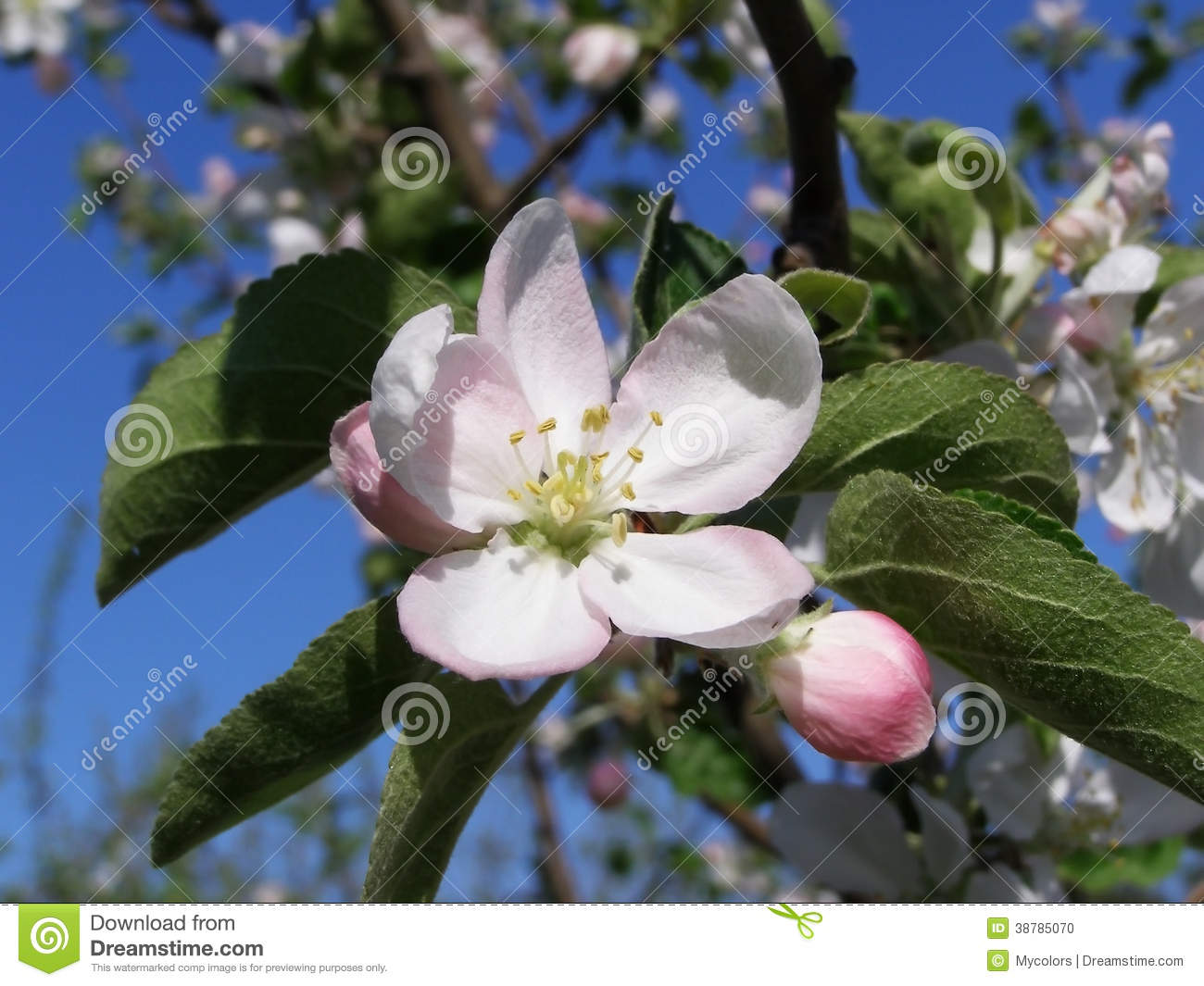 White Flowers On A Tree In A Spring Garden Stock Photo Image Of