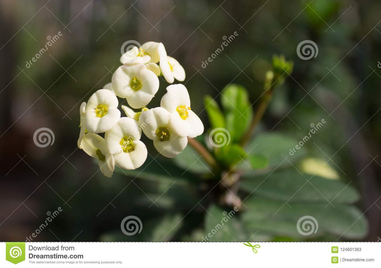 White Flowers Of An Unknown Plant Under The Rays Of A Sun Stock