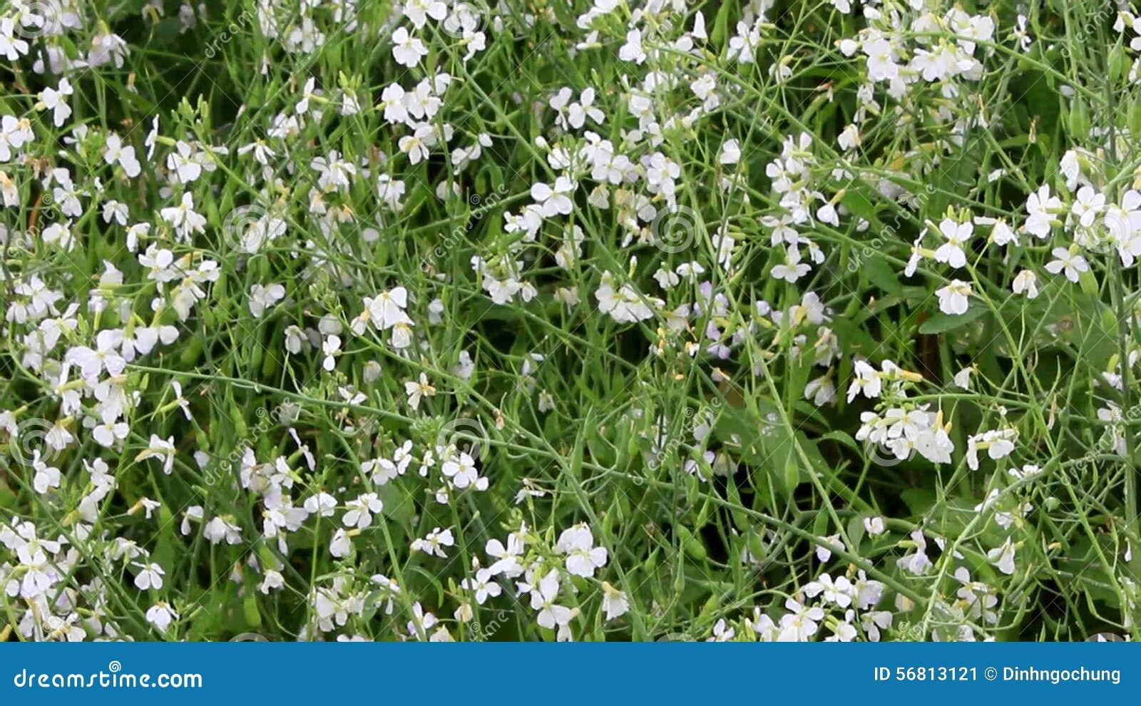 White Flowers In The Vegetable Garden Stock Video Video Of