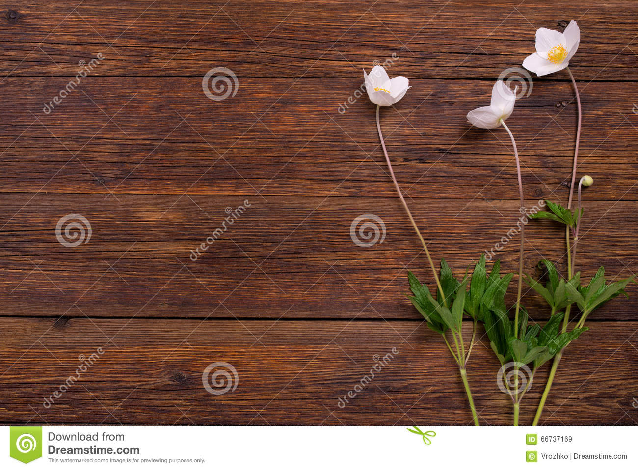 White flowers on wooden table top view copy space stock photo white flowers on wooden table top view copy space stock photo 66737169 megapixl mightylinksfo