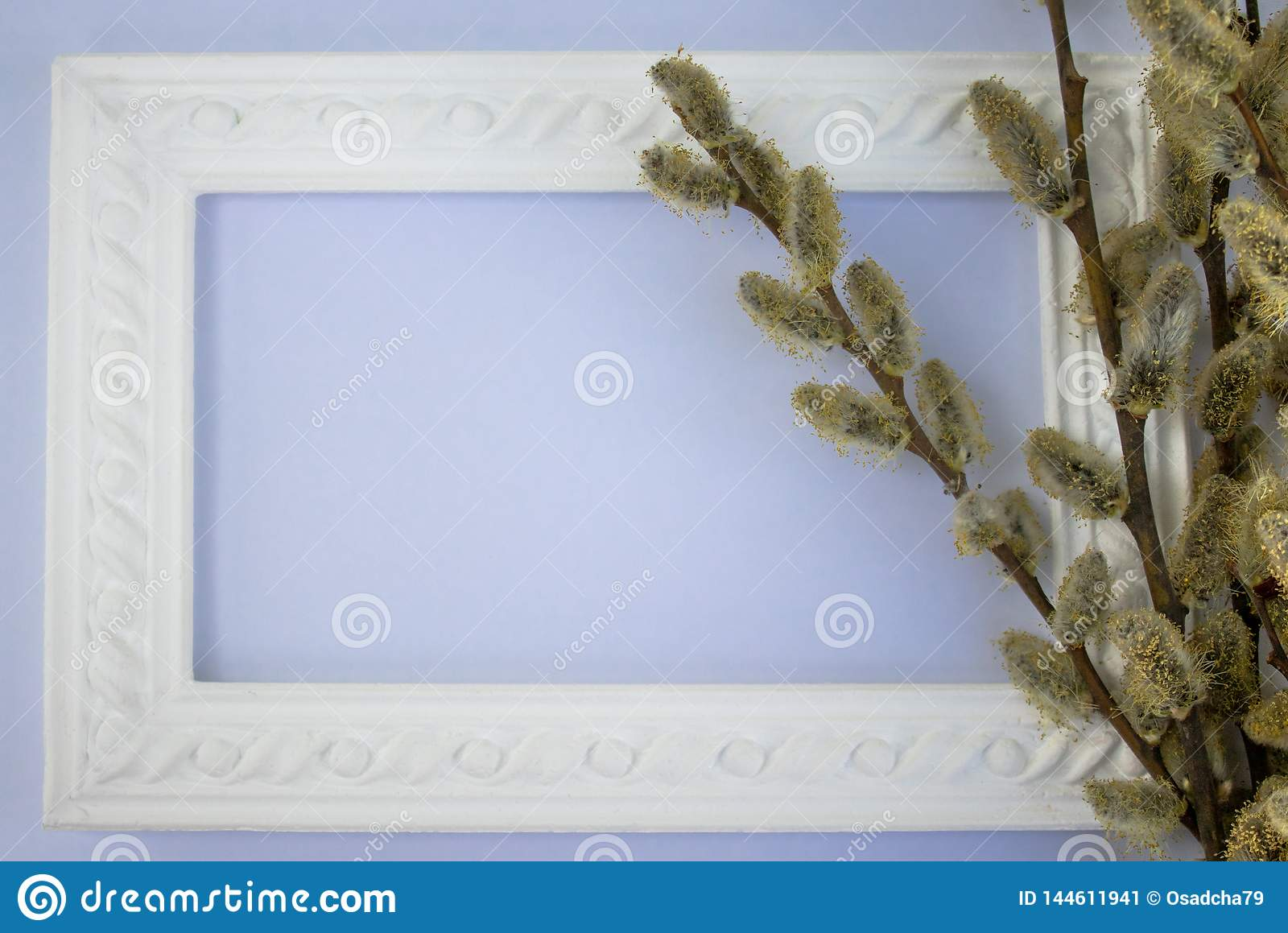 White frame with branches of buds of yellow willow on a pink - blue background. Copy space in the middle for your text