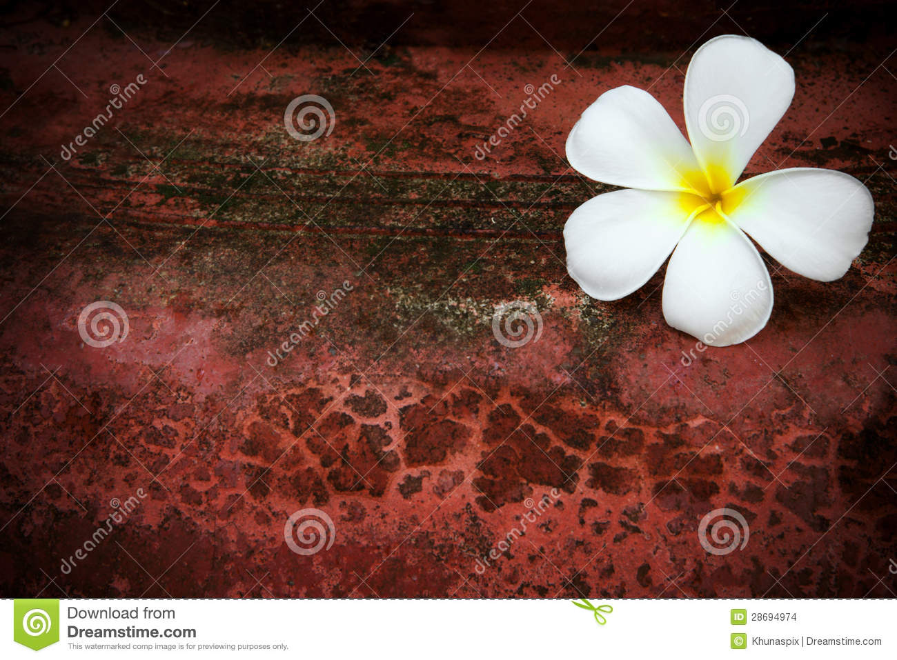 White frangipani flower on red grungy background