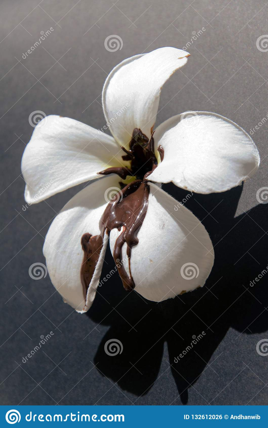 White Flower Tainted With Molten Chocolate Stock Photo Image Of