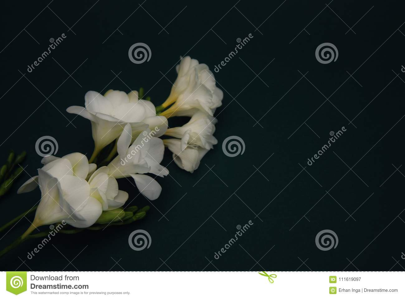 White Freesia Bouquet of Flowers on Black Background. Copy Space. close up.