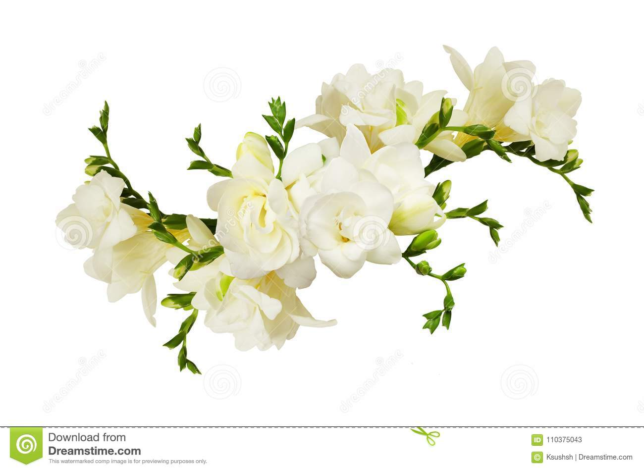 White Freesia Flowers In A Beautiful Arrangment Stock Image Image