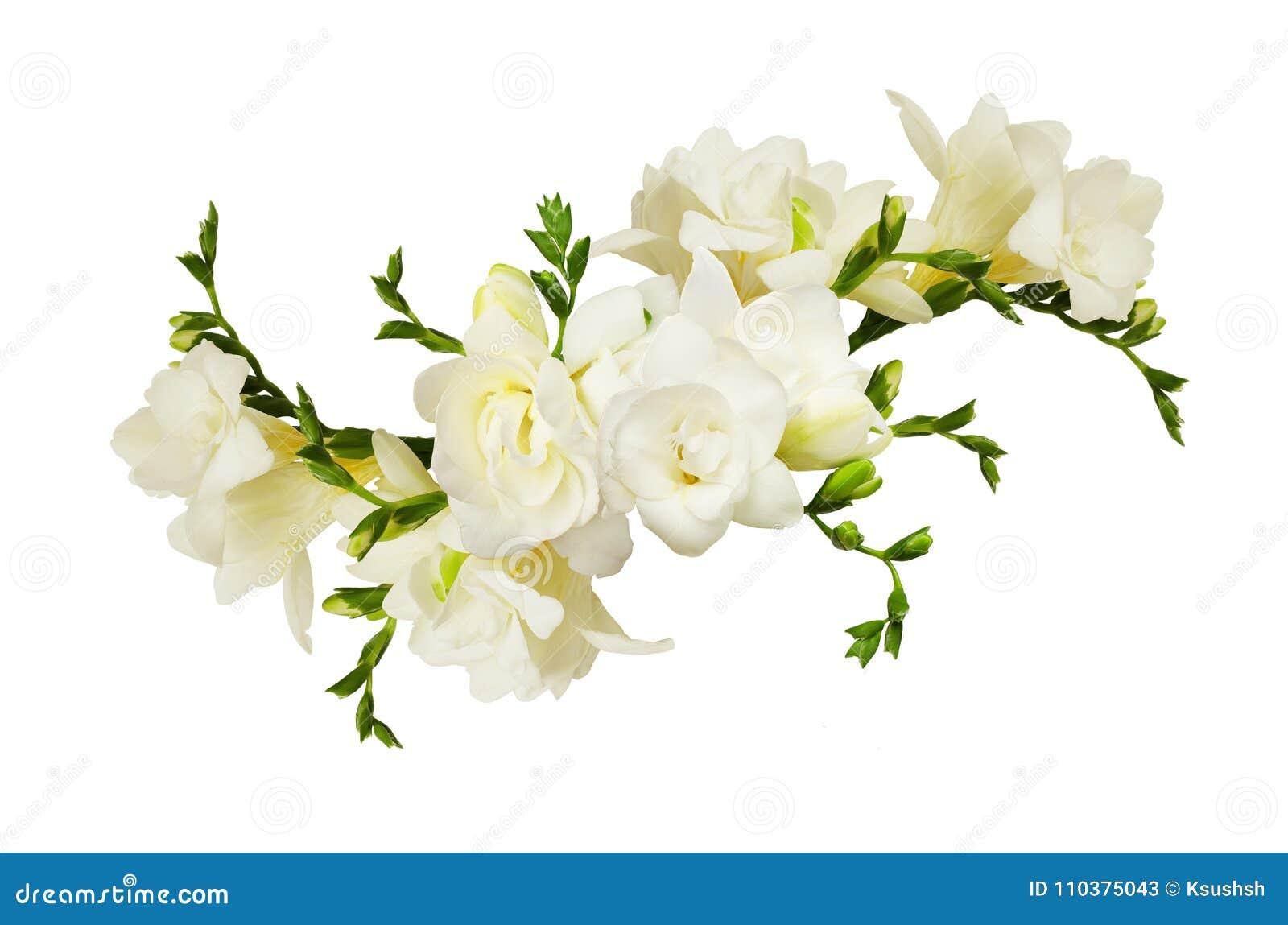 White freesia flowers in a beautiful arrangment stock image image white freesia flowers in a beautiful arrangment mightylinksfo