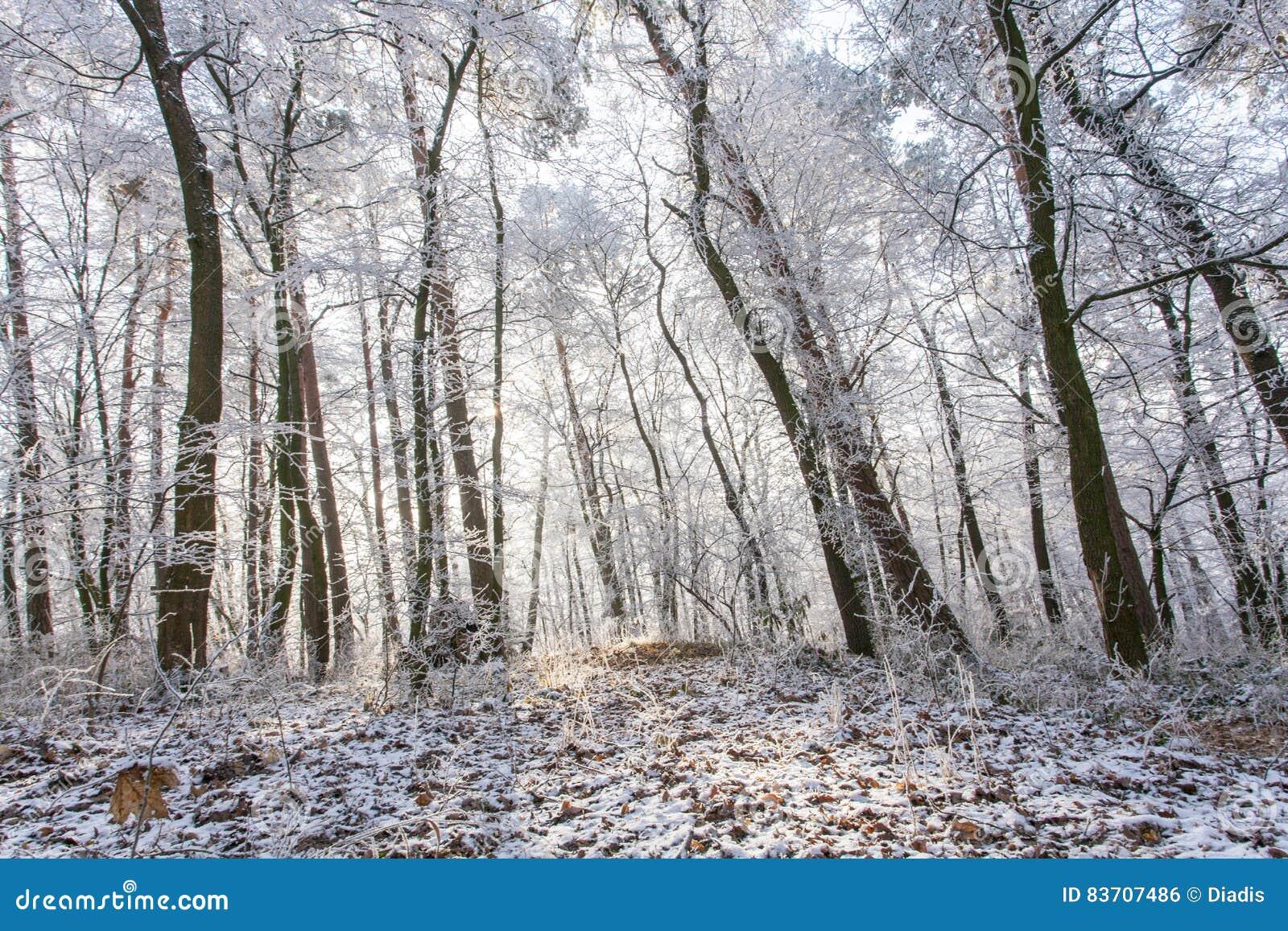 White Frozen Winter Magic Forest Landscape In The Morning Light Stock Photo