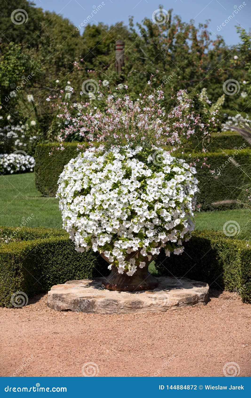 White garden in the picturesque Jardins du Manoir d Eyrignac in Dordogne.