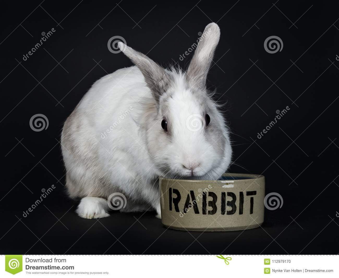 White with grey rabbit eating