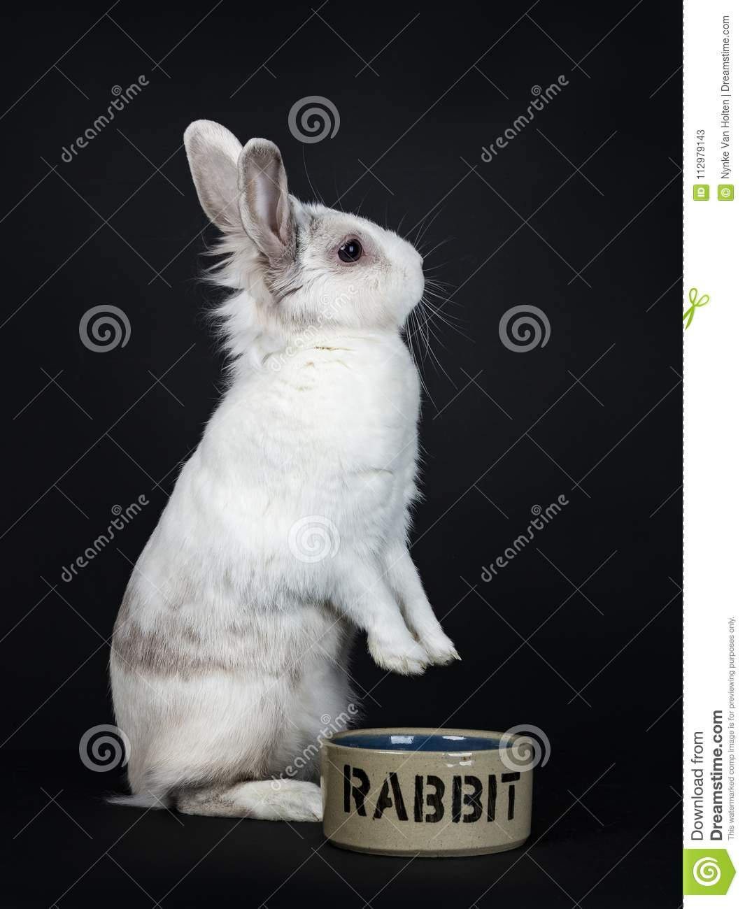 White with grey rabbit