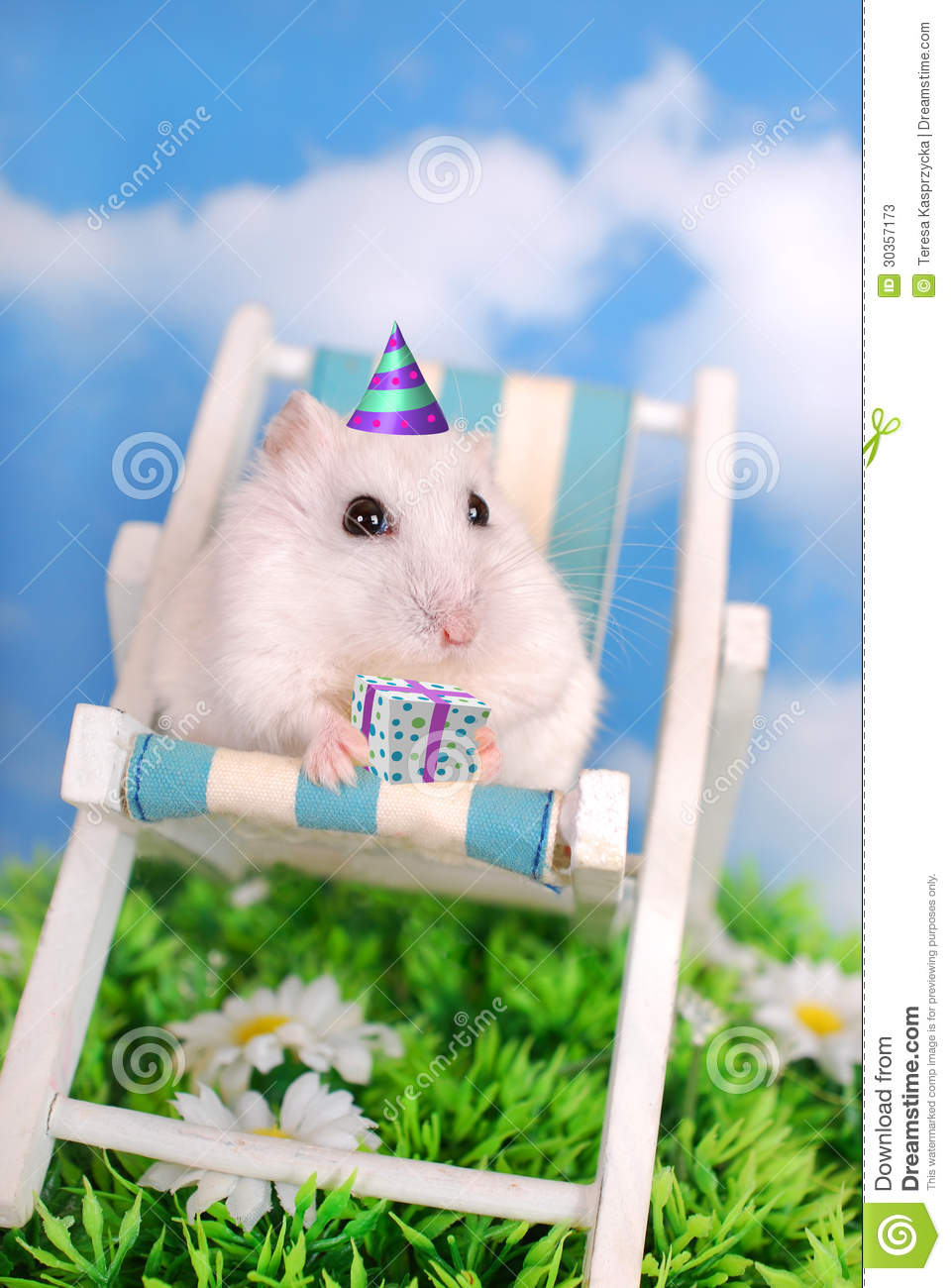 White Hamster Celebrating Birthday Stock Photos Image