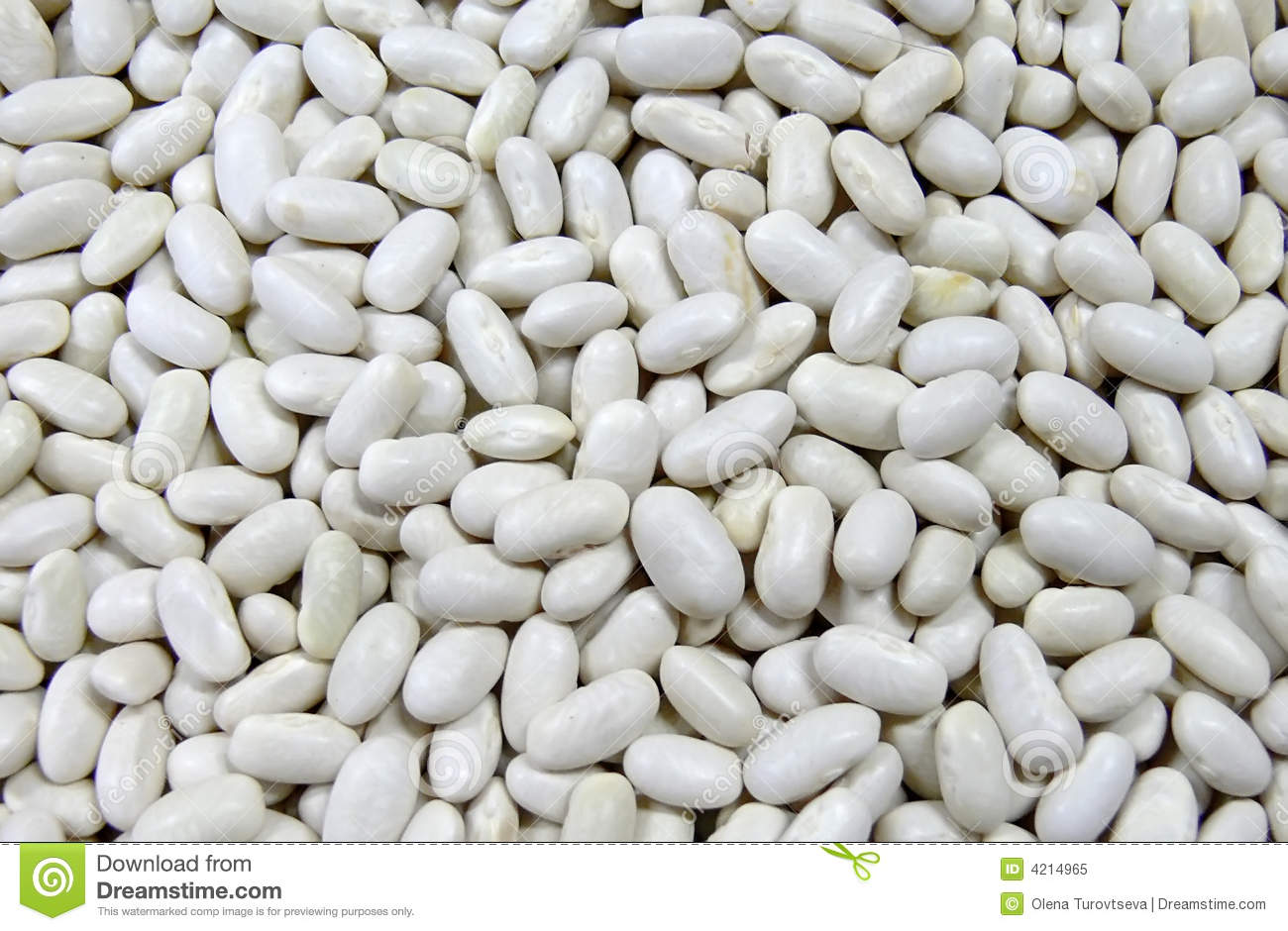 how to grow haricot beans