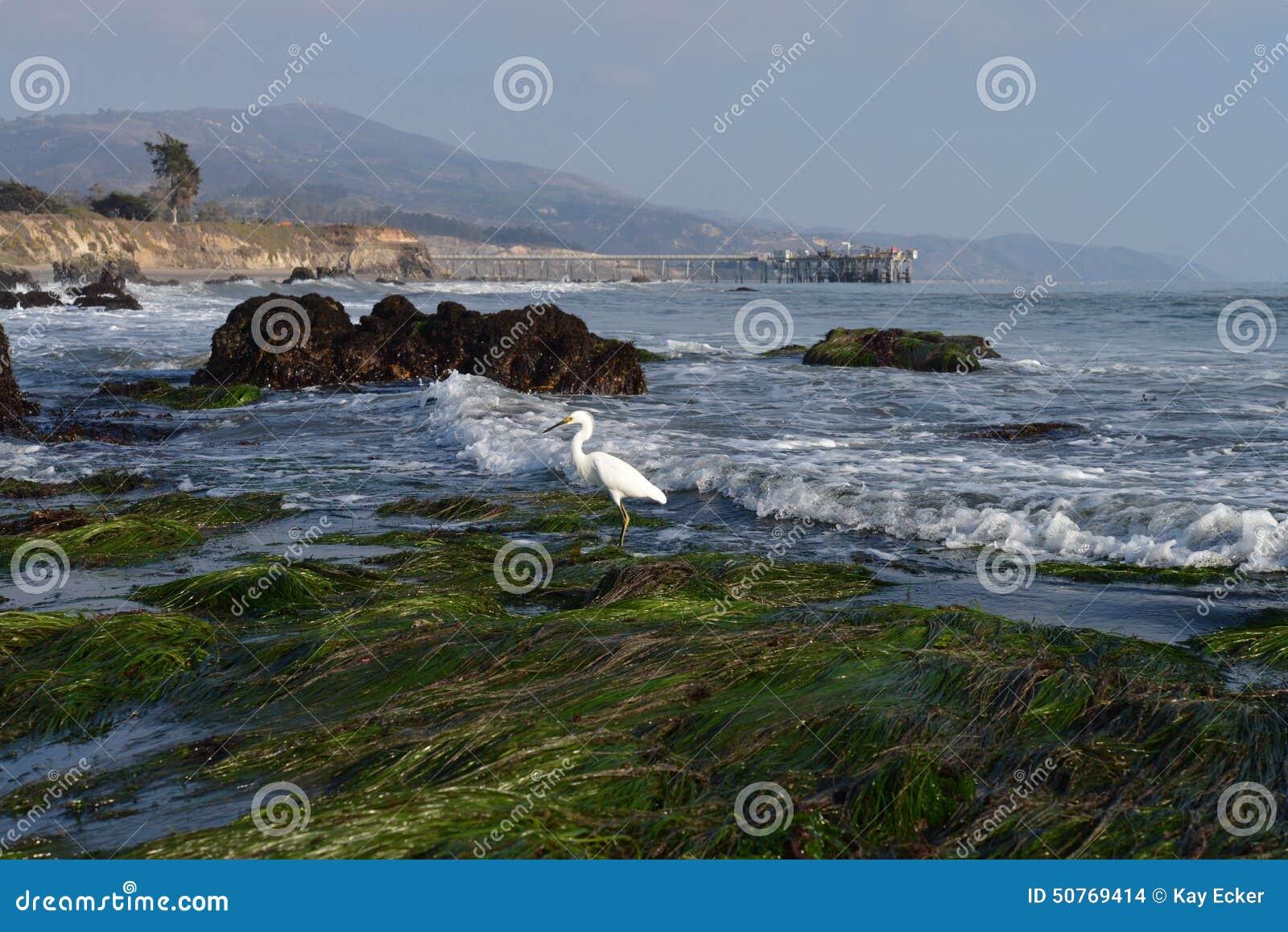 White Heron at Beach