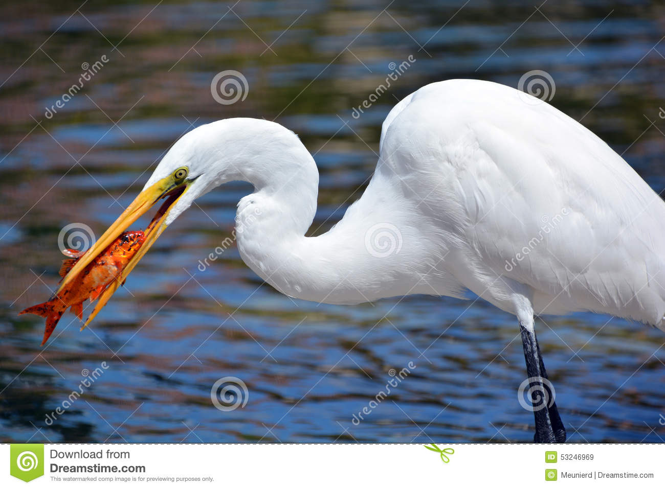 Bowfin additionally Episodes also 8 la usa 51005 together with More Paintings From Mystery Case Files likewise Watch. on fish in cypress swamp