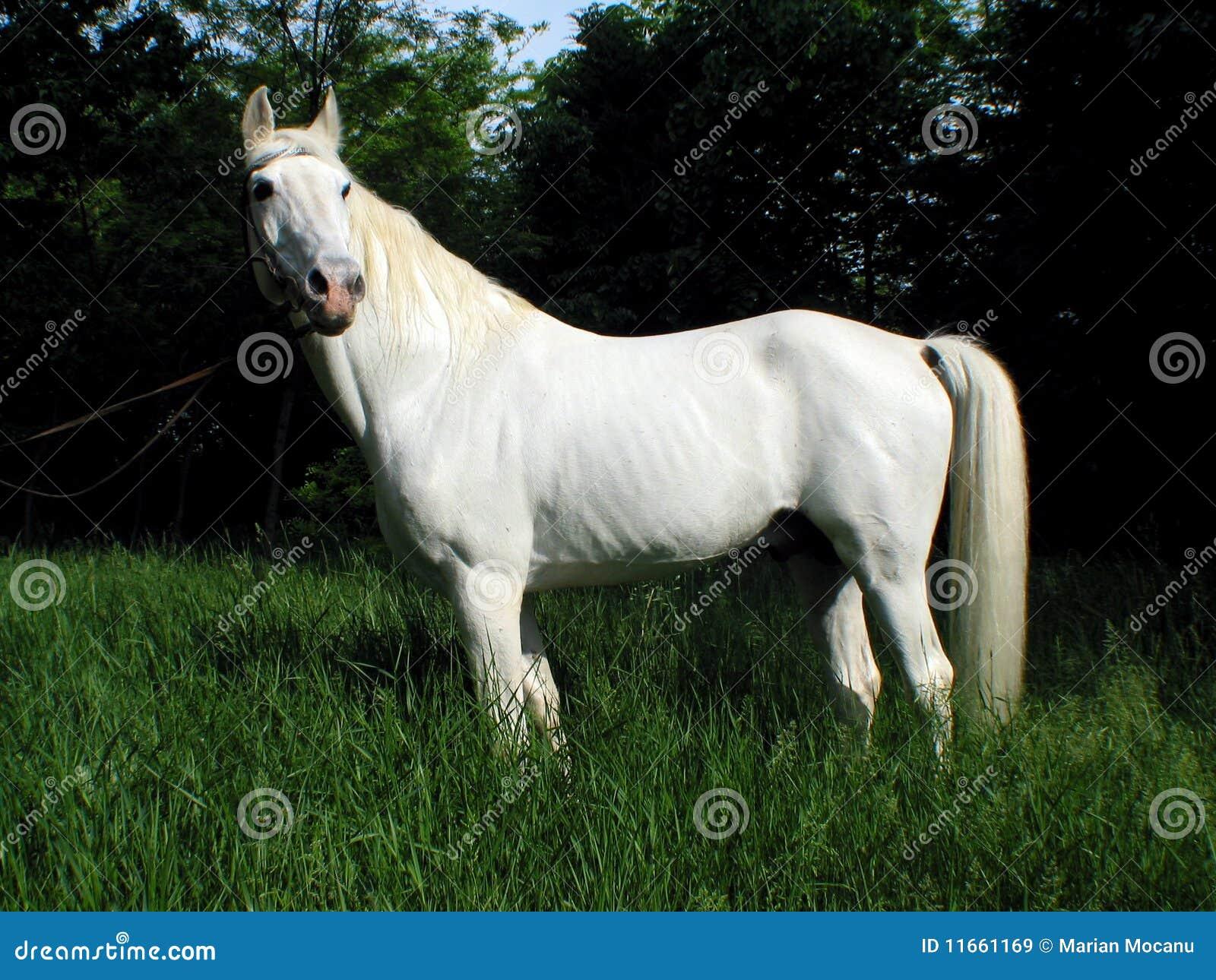 Image Result For White Horse Farm Wallpaper