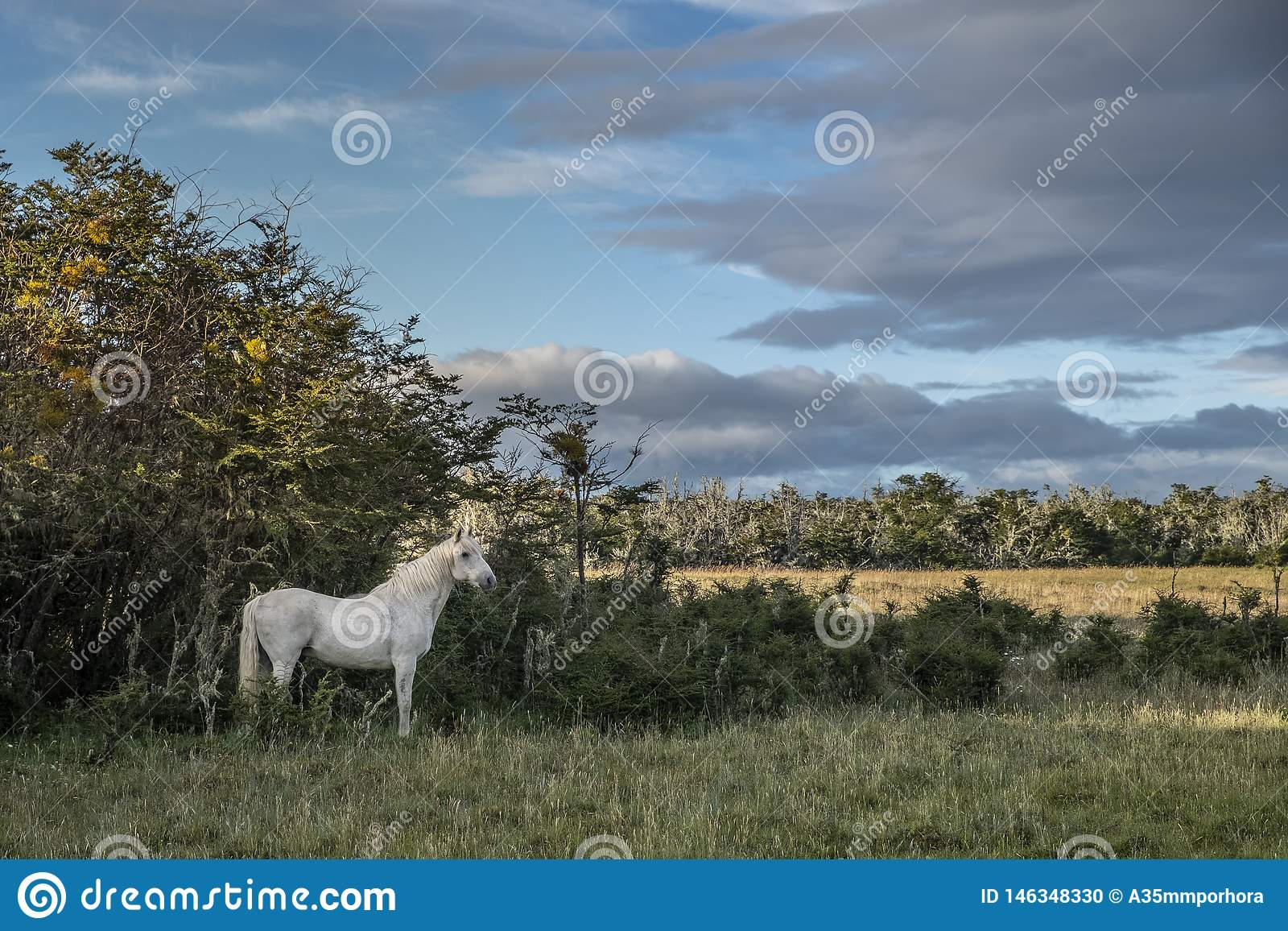 White horse alone in the middle of the field.