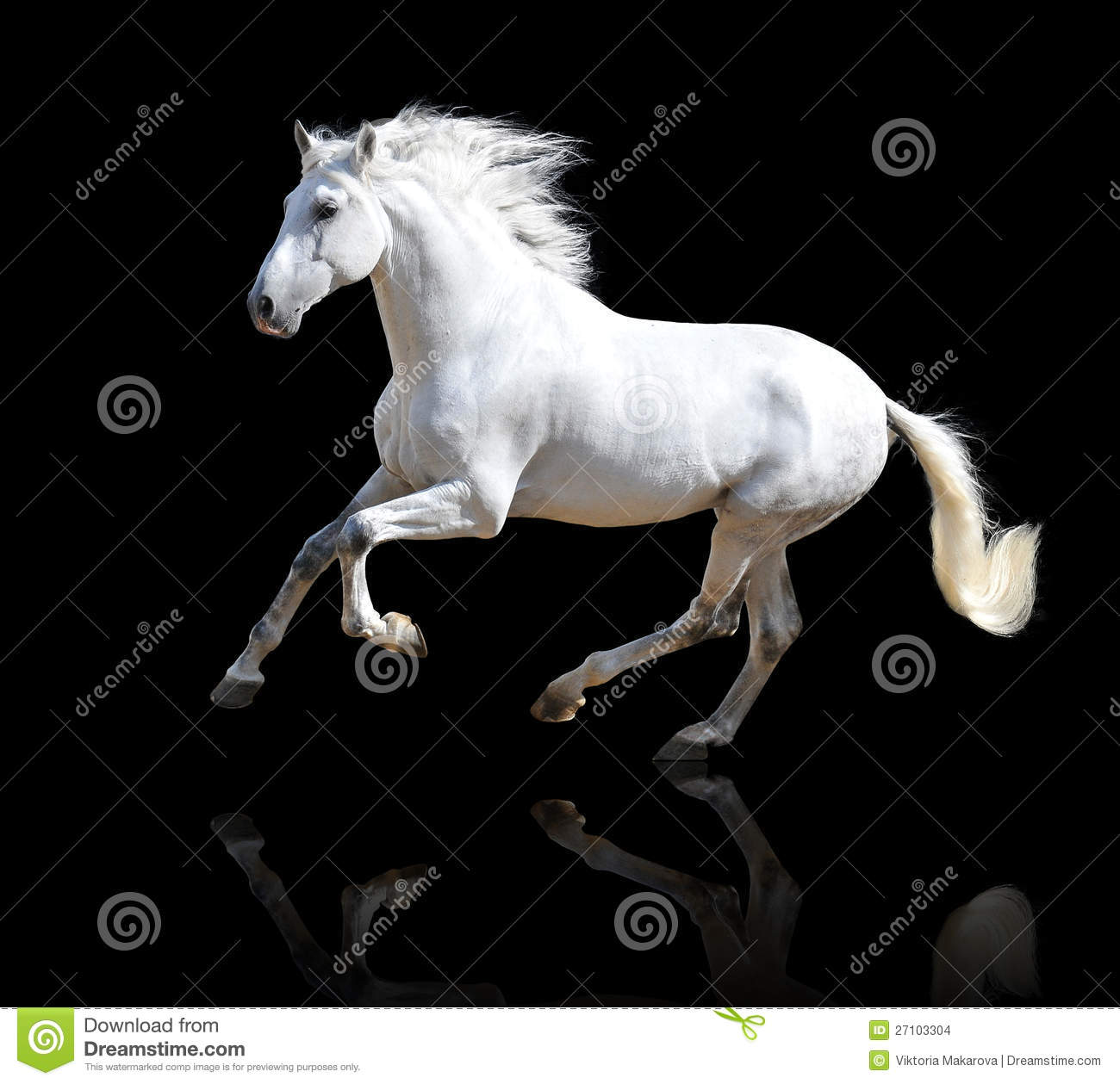 White horse on the black