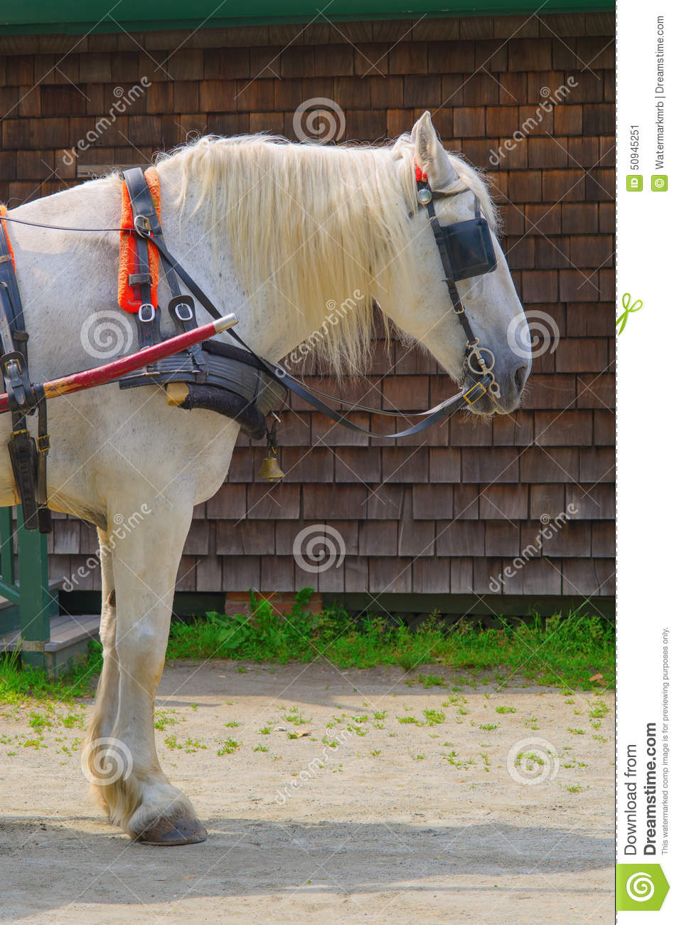 White Horse With Blinders Stock Image Image Of Hooves 50945251