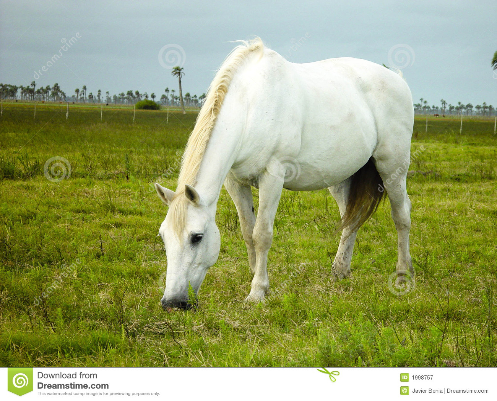 White horse eating grass - photo#1