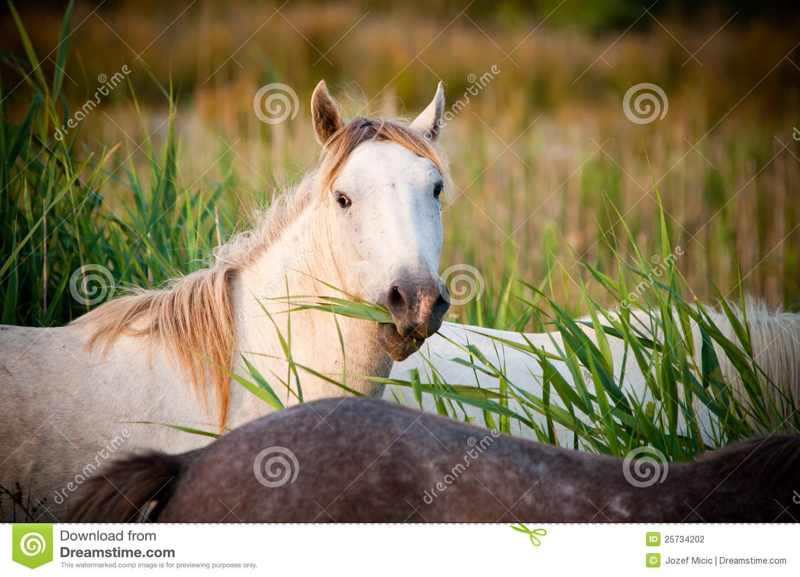 White horse eating grass - photo#9