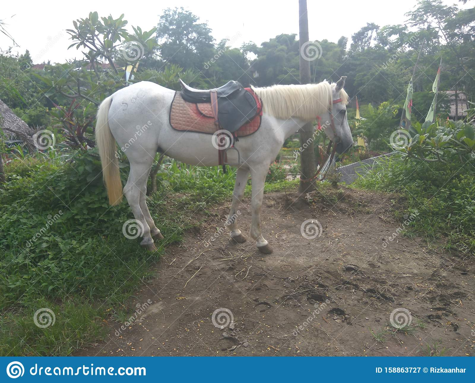 White Horse In The Farm Stock Image Image Of Genus 158863727