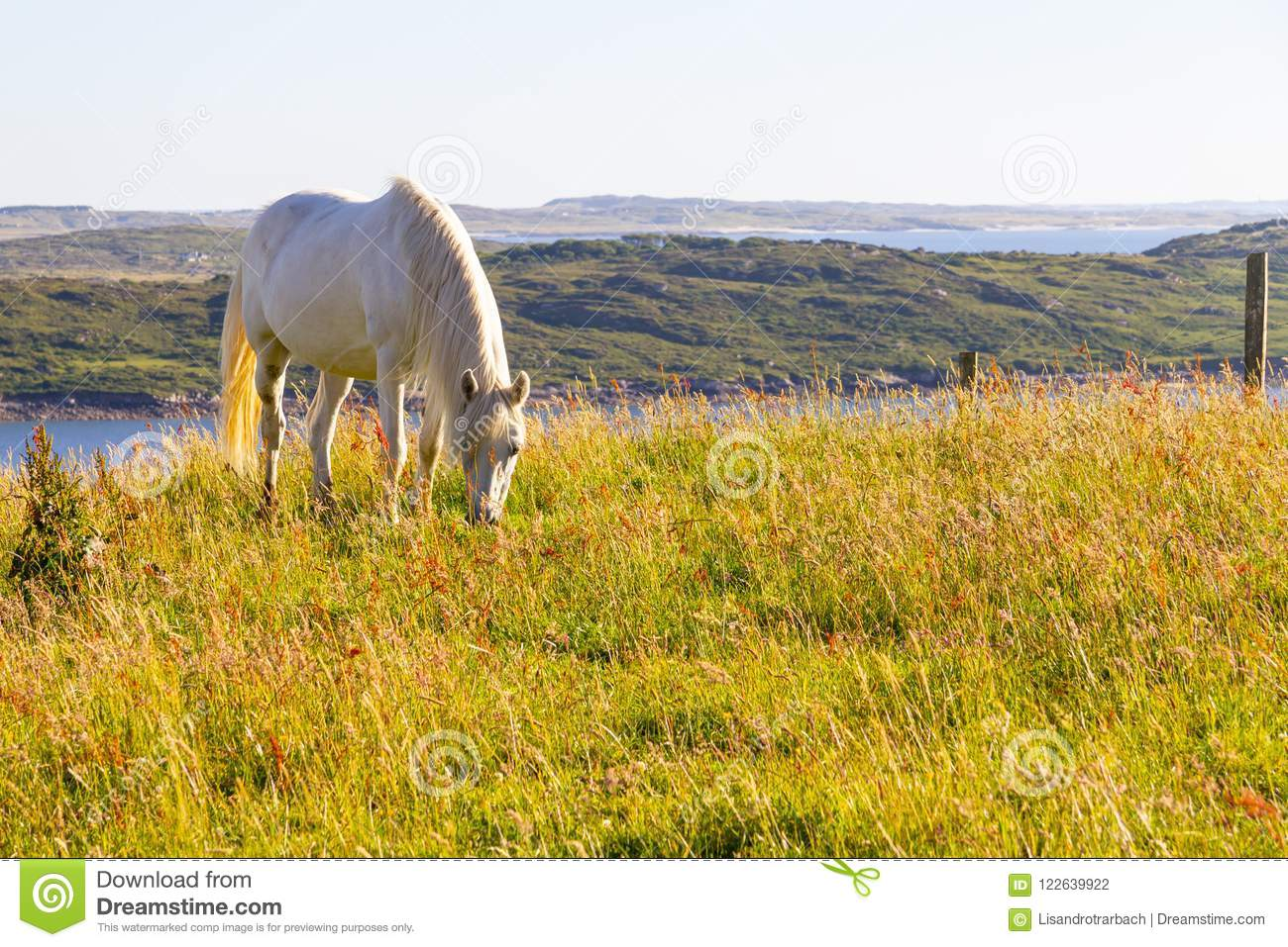 White Horse In A Farm Field Stock Photo Image Of Animal Ireland 122639922