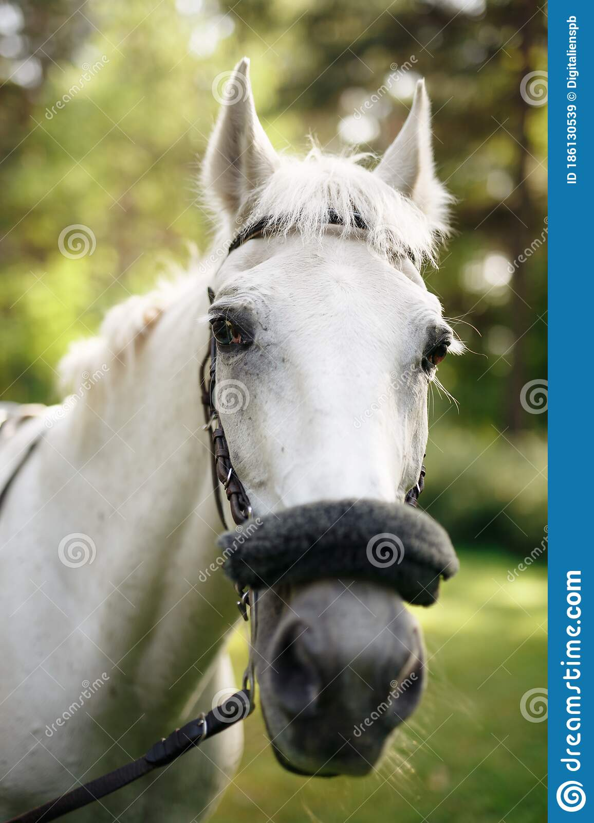 34 461 White Horse Head Photos Free Royalty Free Stock Photos From Dreamstime