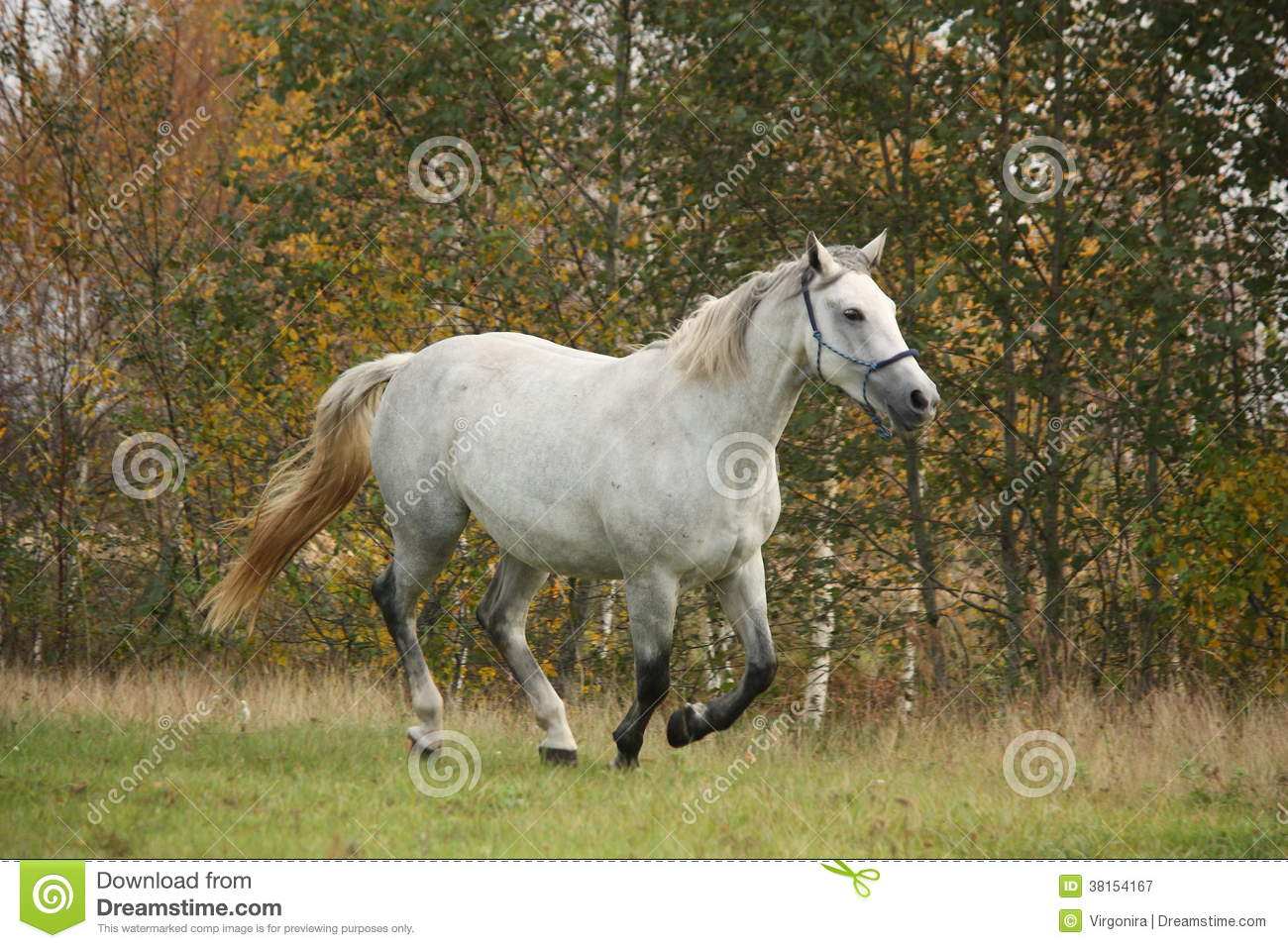 Galloping white horse - photo#15