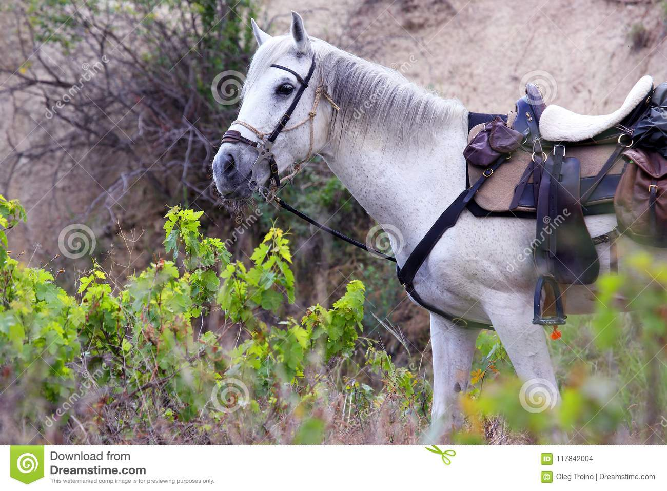 White Horse Gear Saddle On The Nature Stock Photo Image Of Nature Head 117842004