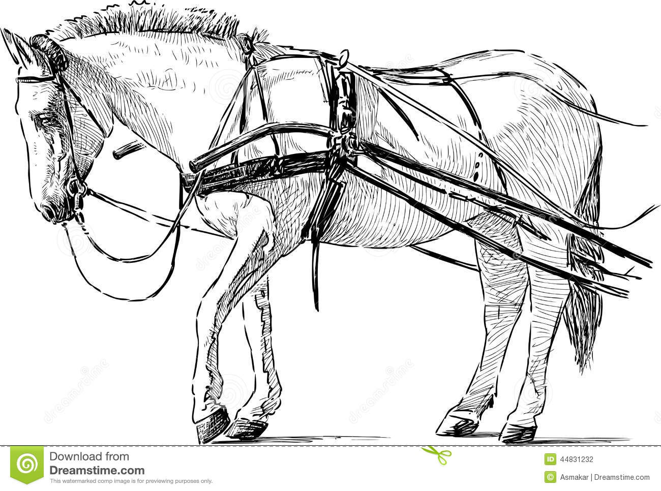 White Horse In The Harness Stock Vector Image 44831232