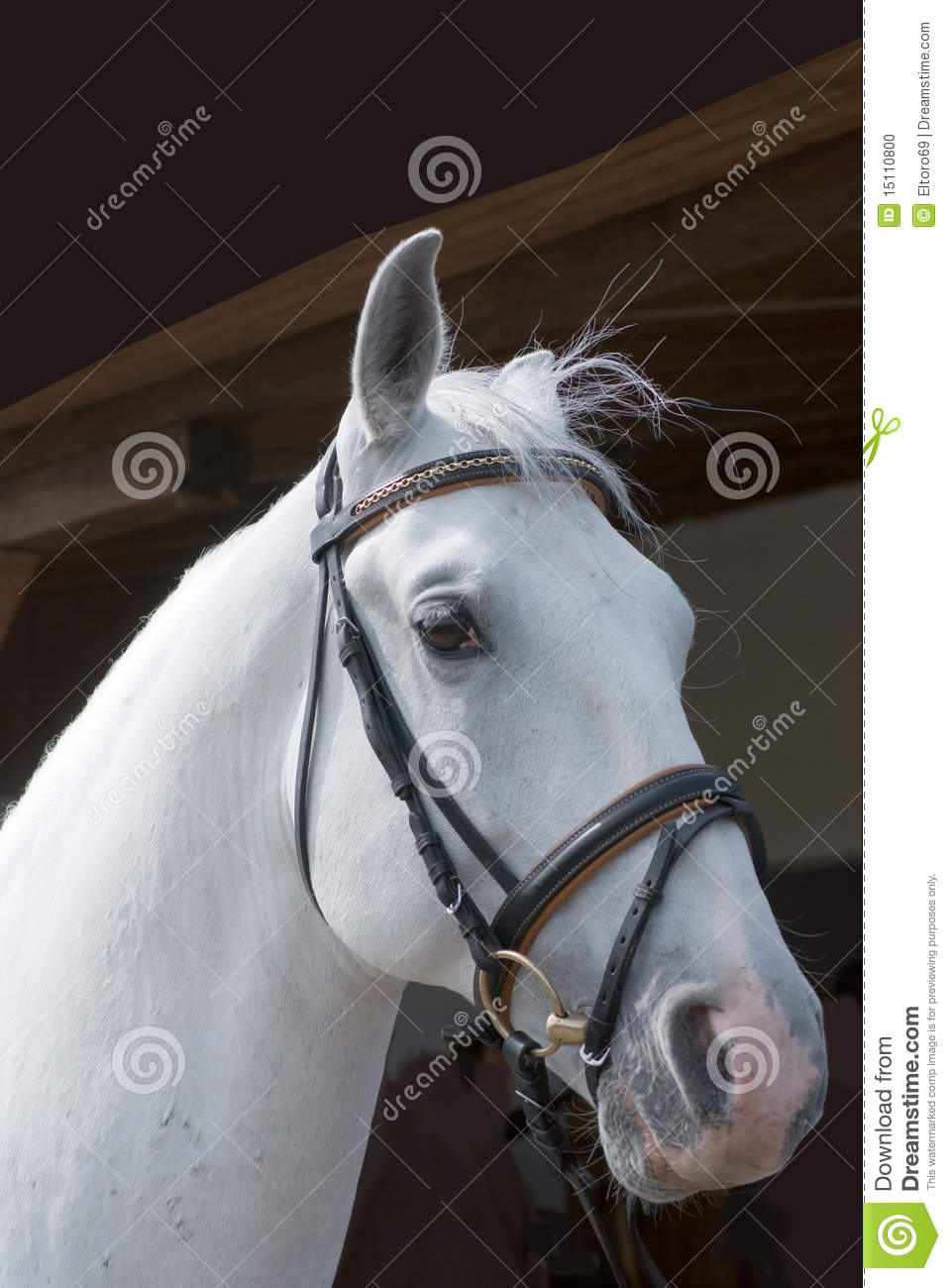 White Horse Head Stock Photo Image Of Countryside Mane 15110800