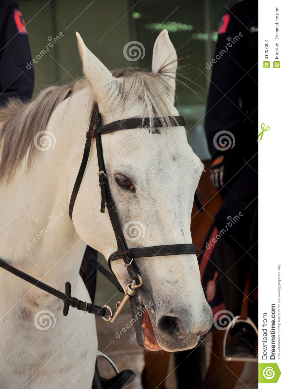 horse and human relationship